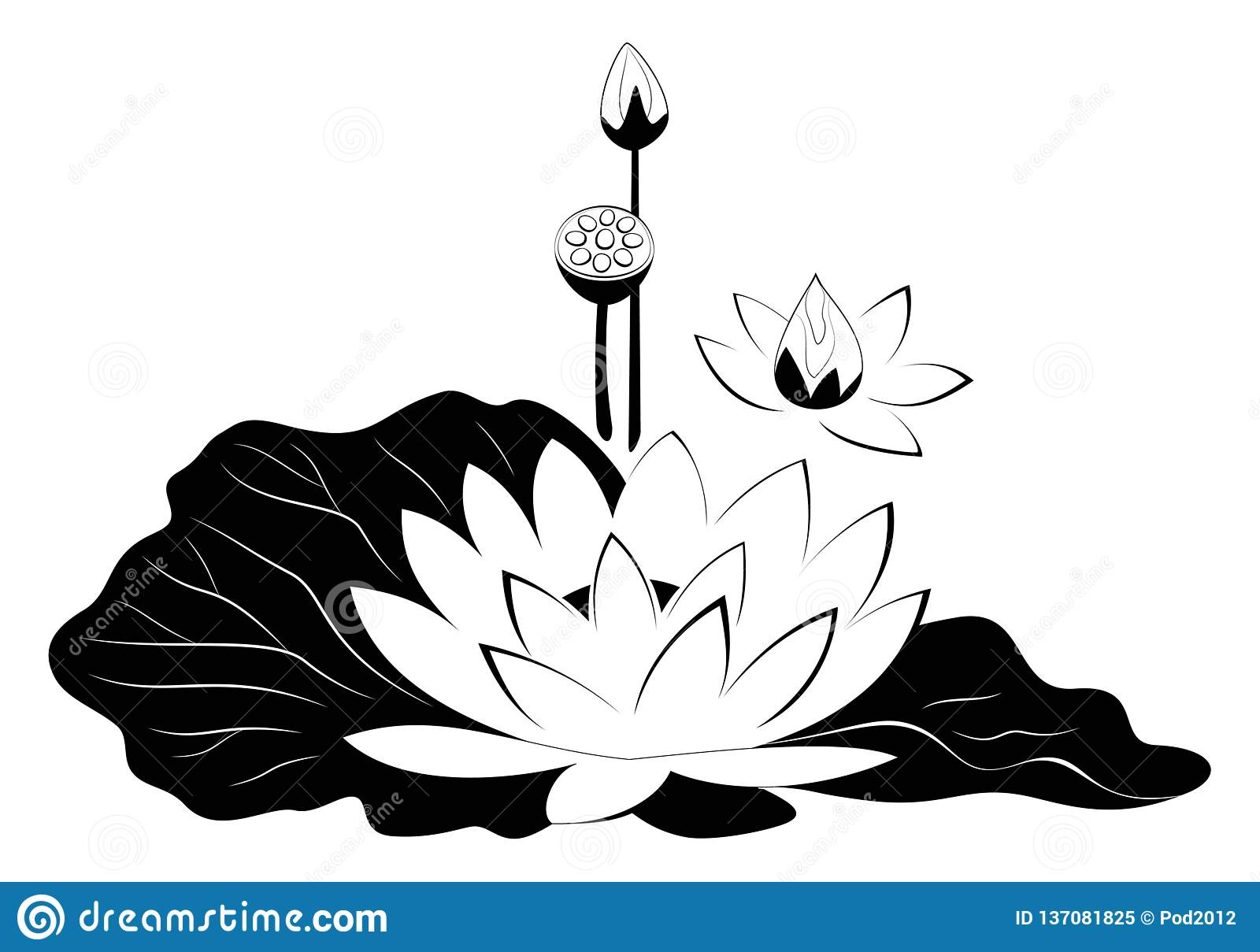 Lotus Flower With Leaves Black Silhouette Stock Vector Illustration Of Background Water 137081825
