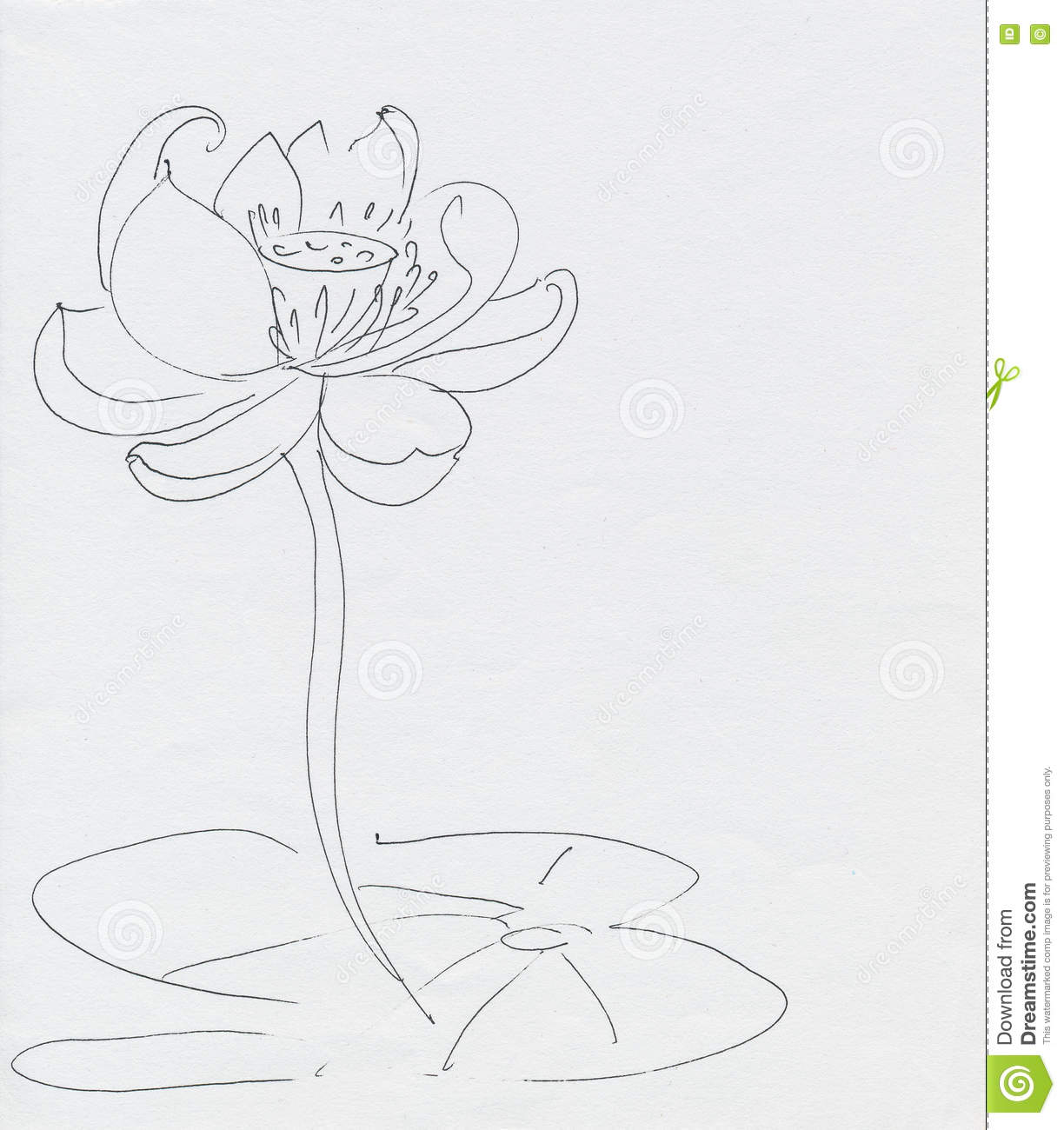 Lotus Drawing Worksheet Cartoon Vector
