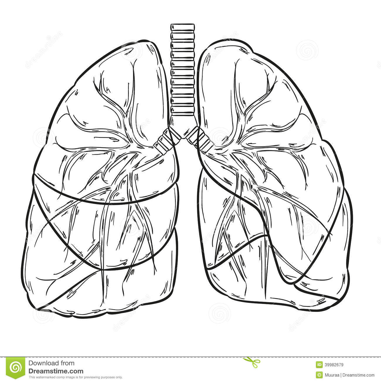 Lungs Sketch Stock Vector Illustration Of Lobe Handdrawn