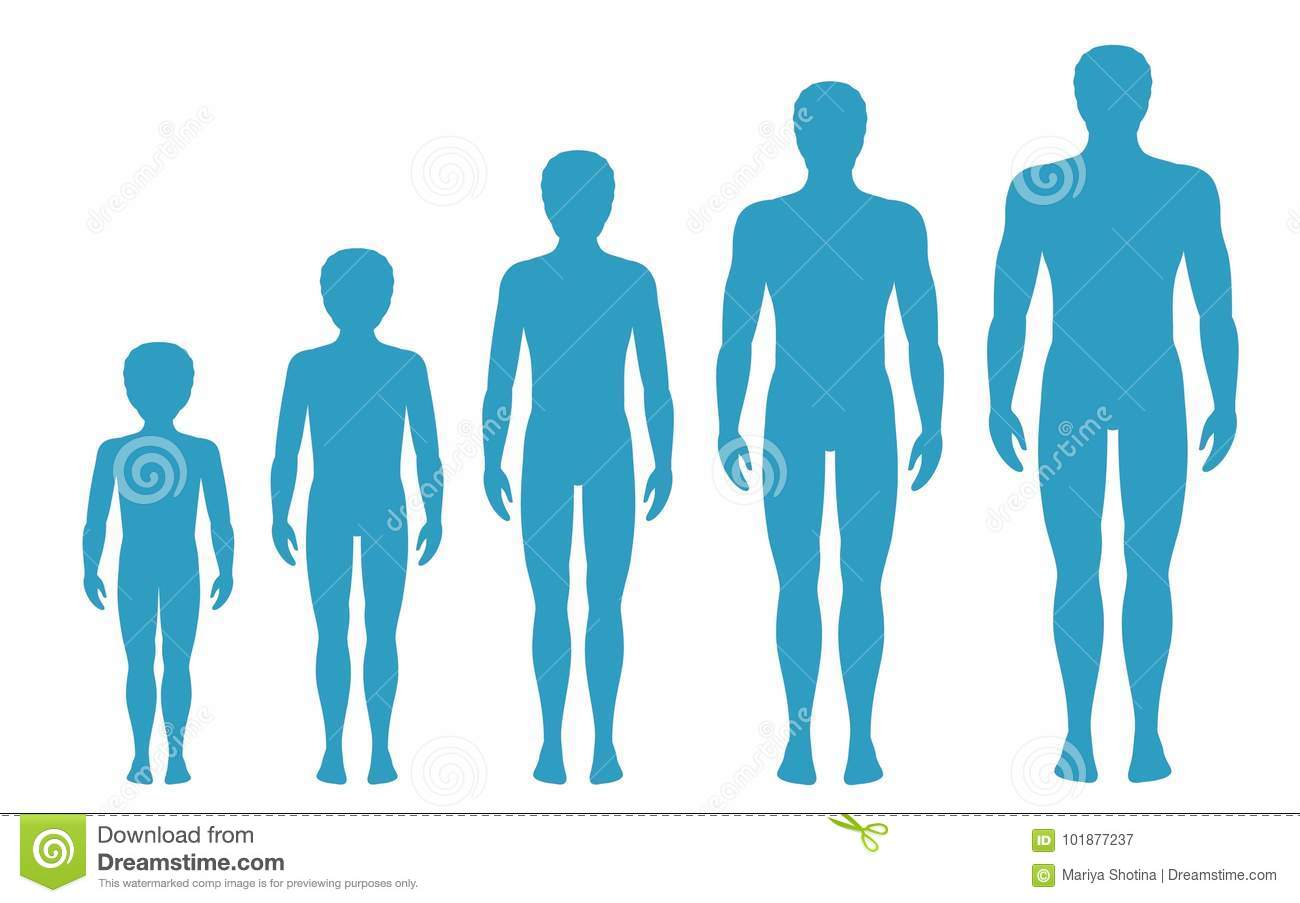 Man S Body Proportions Changing With Age Boy S Body