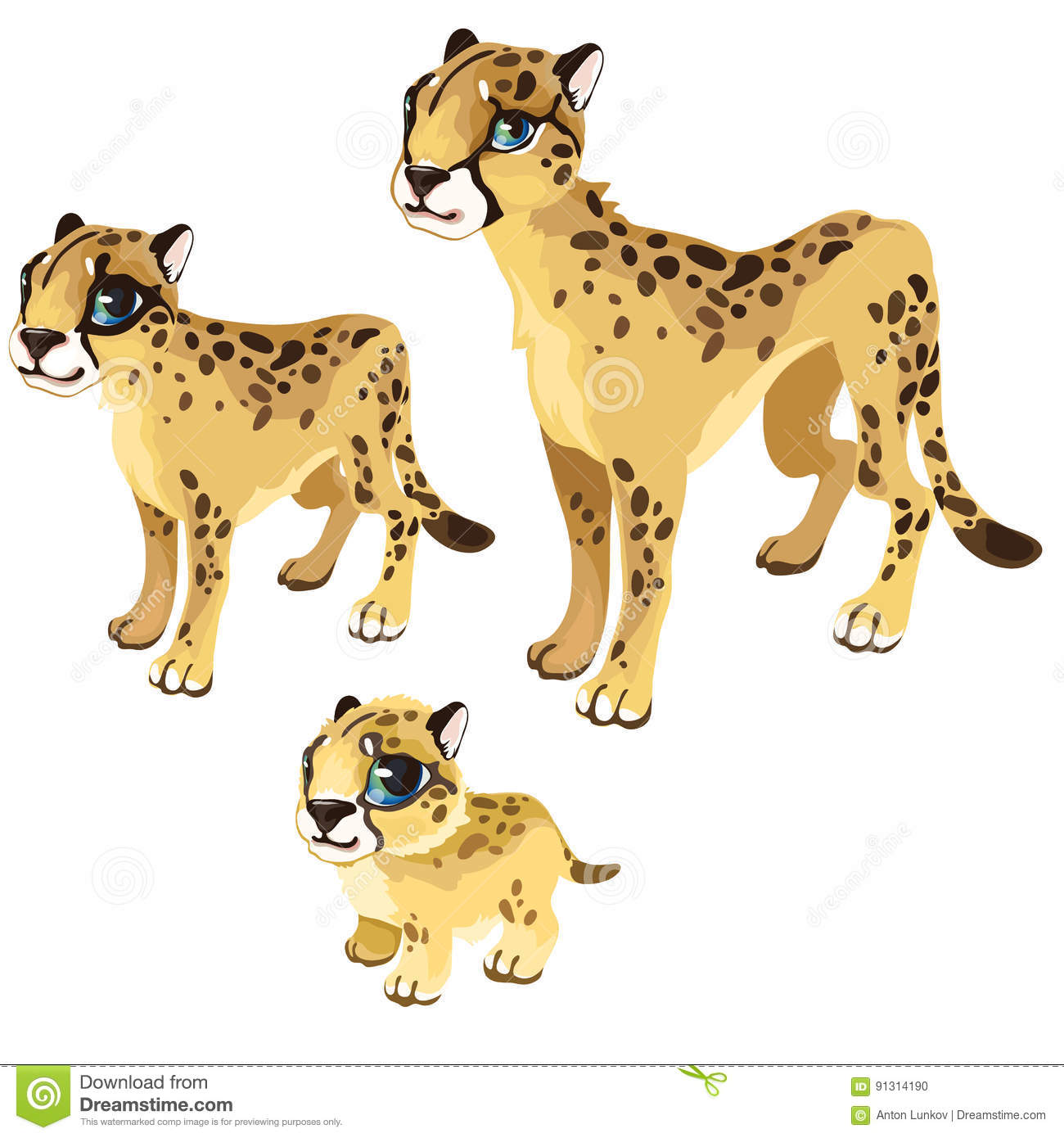 Maturation Stages Of The Leopard Vector Animal Stock