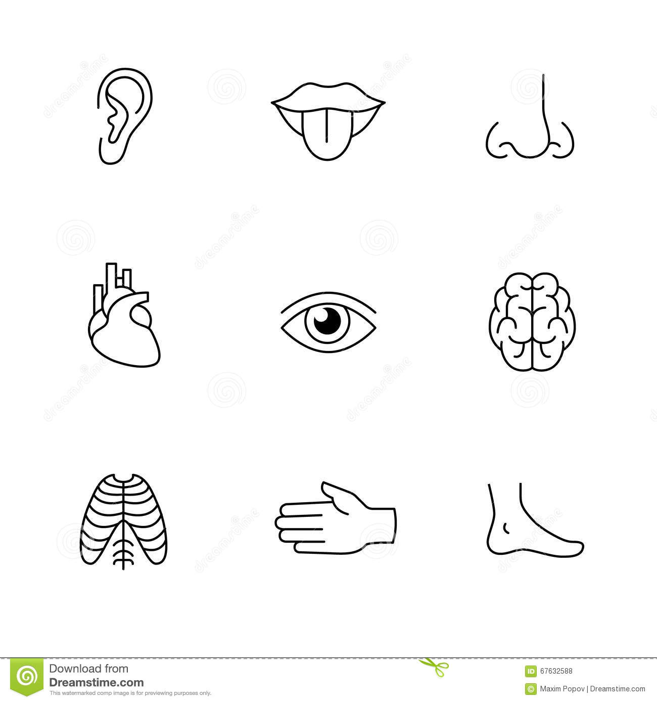 Medical Icons Thin Line Art Set Human Organs Stock Vector