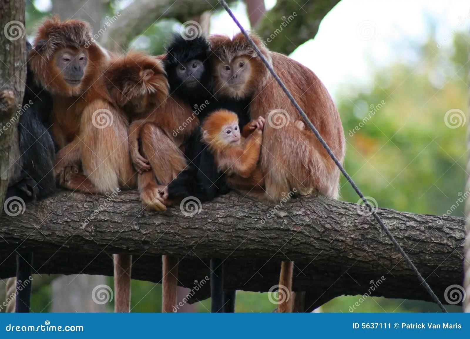 Monkeys Sitting On A Branch Stock Image Image 5637111