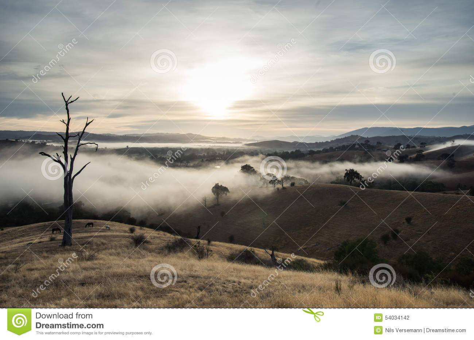 Morning Fog In Goulburn River Valley In Victoria Australia Stock Photo