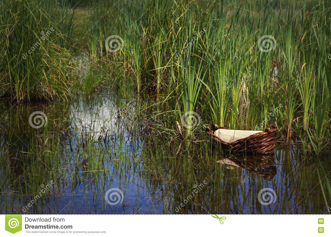 Moses Basket In The Reeds W O Text Stock Image