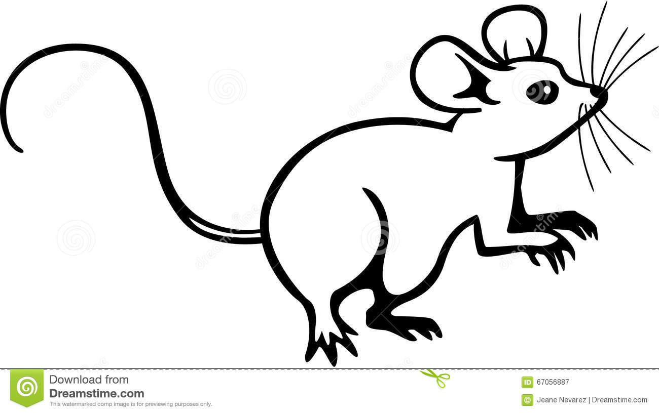Mouse Stock Vector Illustration Of Mammal Artwork