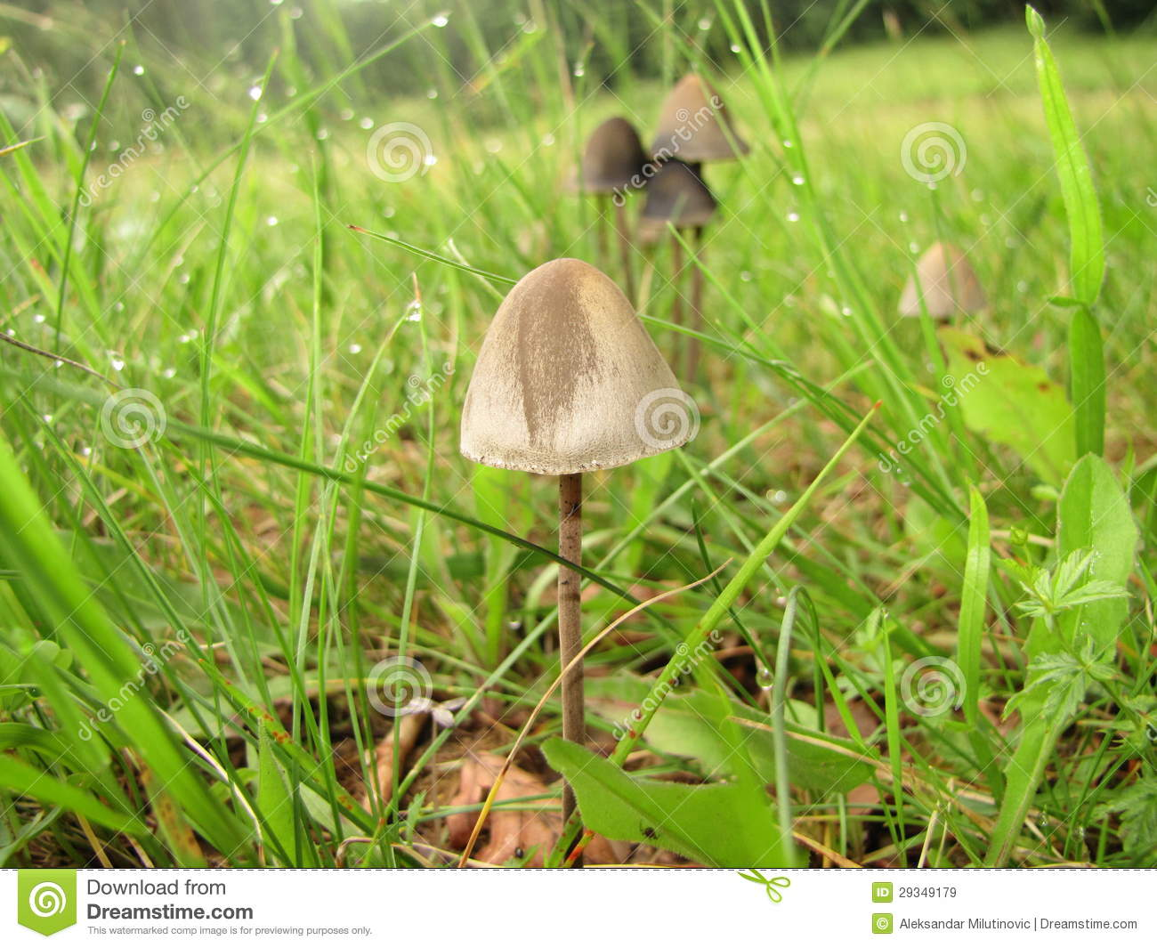 Mushroom After Rain Royalty Free Stock Images