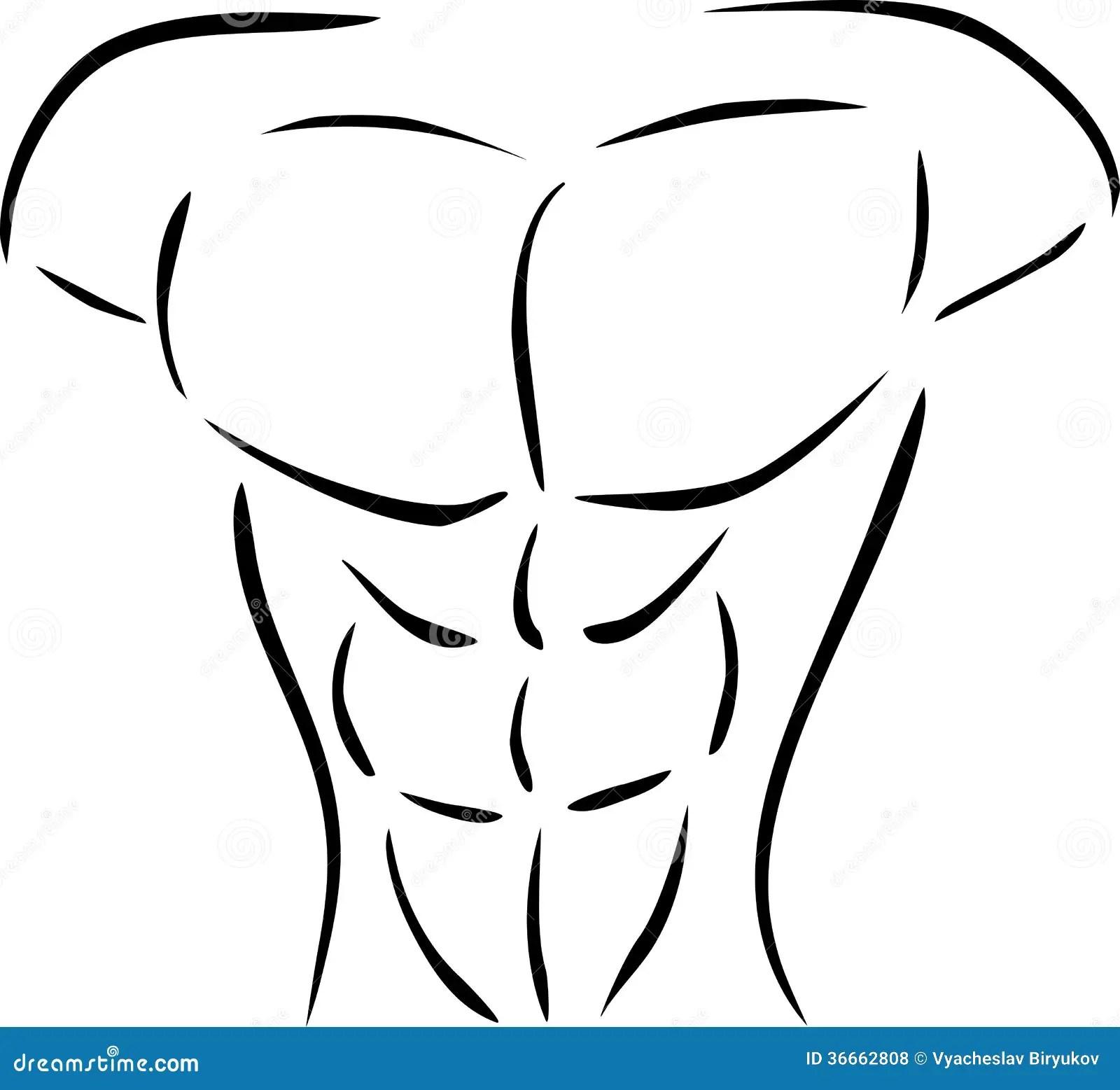 Muskuloser Korper Vektor Abbildung Illustration Von Bodybuilder