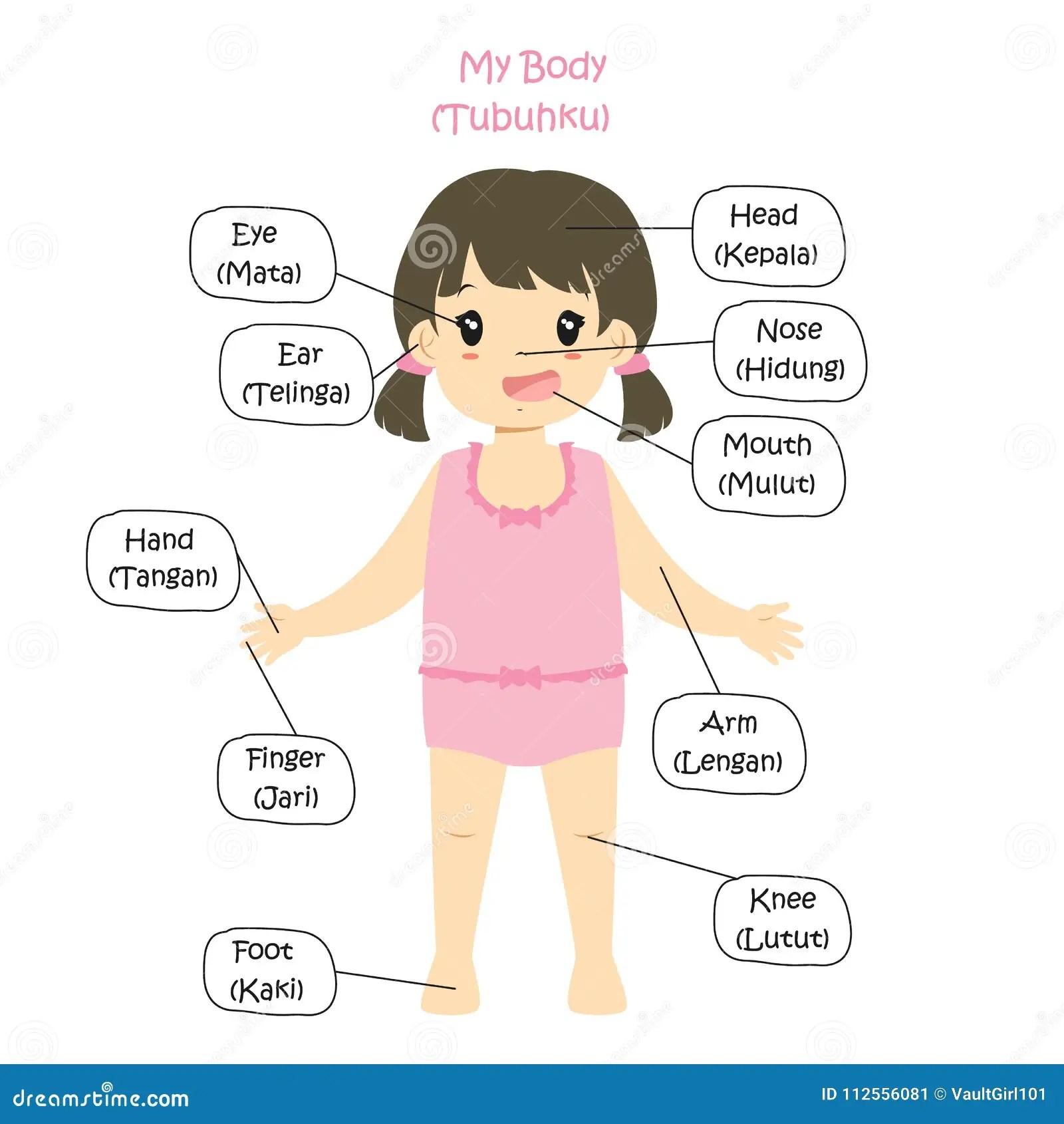 My Body Parts Bilingual Girl Cartoon Vector Stock Vector