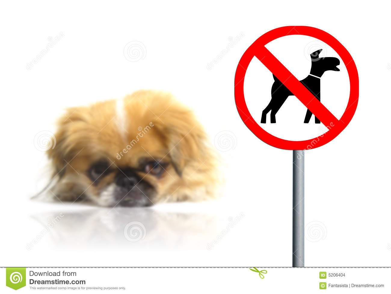 No Pets Allowed Sign Stock Photo Image Of Indicator