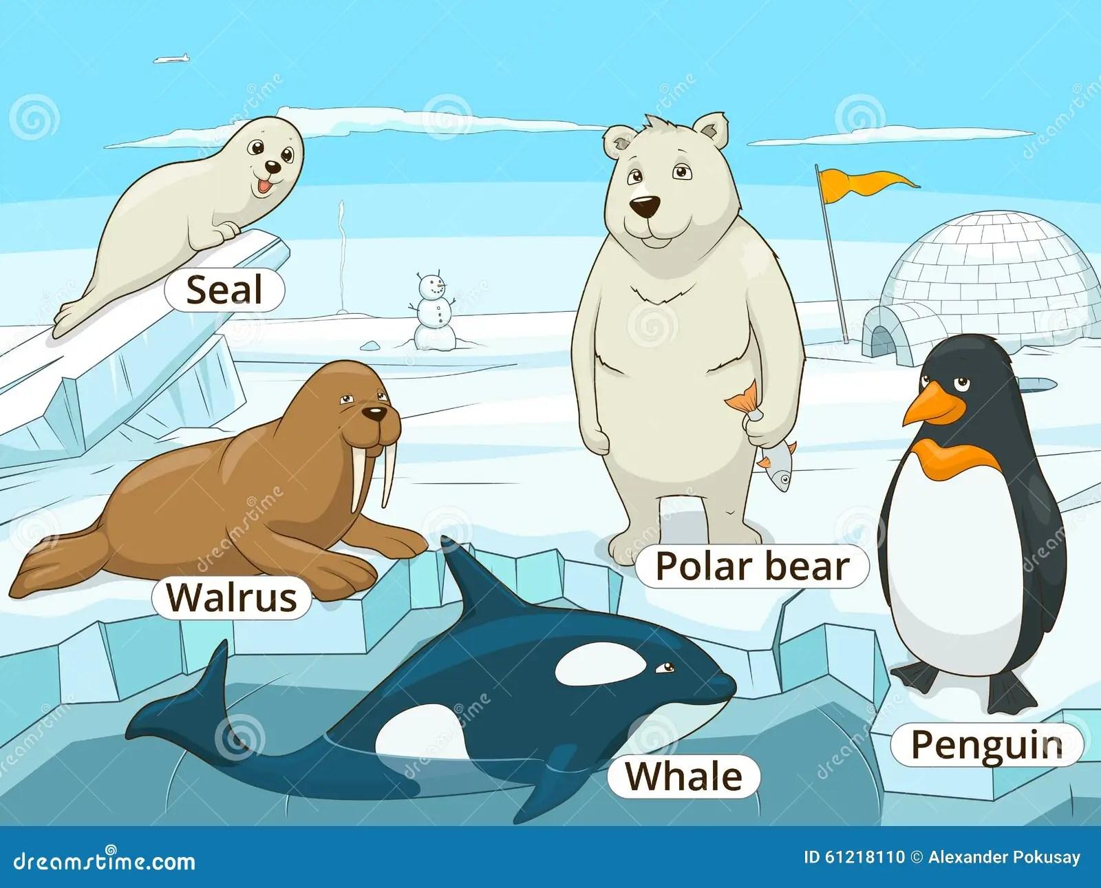 Noordpool Ren Onderwijsspel Voor Jonge Geitjesvector