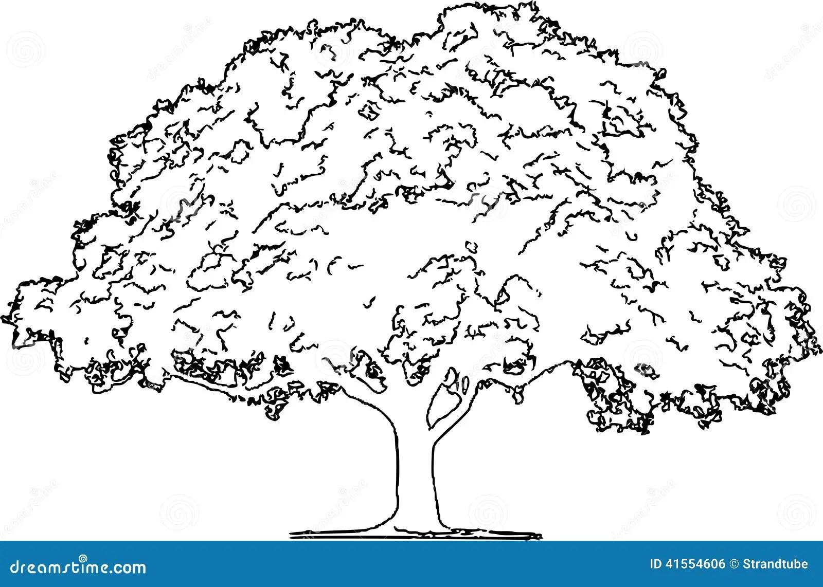 Royalty Free Stock Image Oak Tree Pencil Sketch Eps