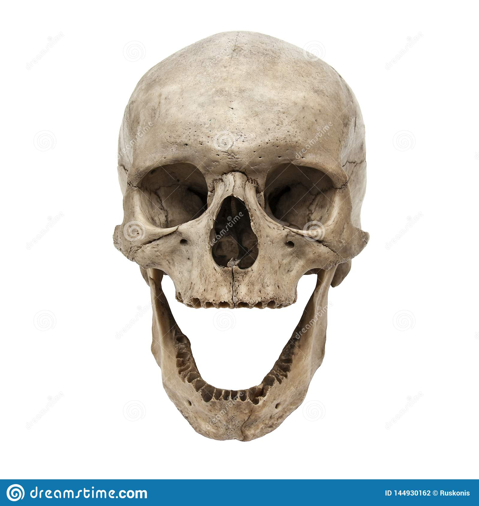 Old Human Skull View From Front Without Teeth Stock Photo