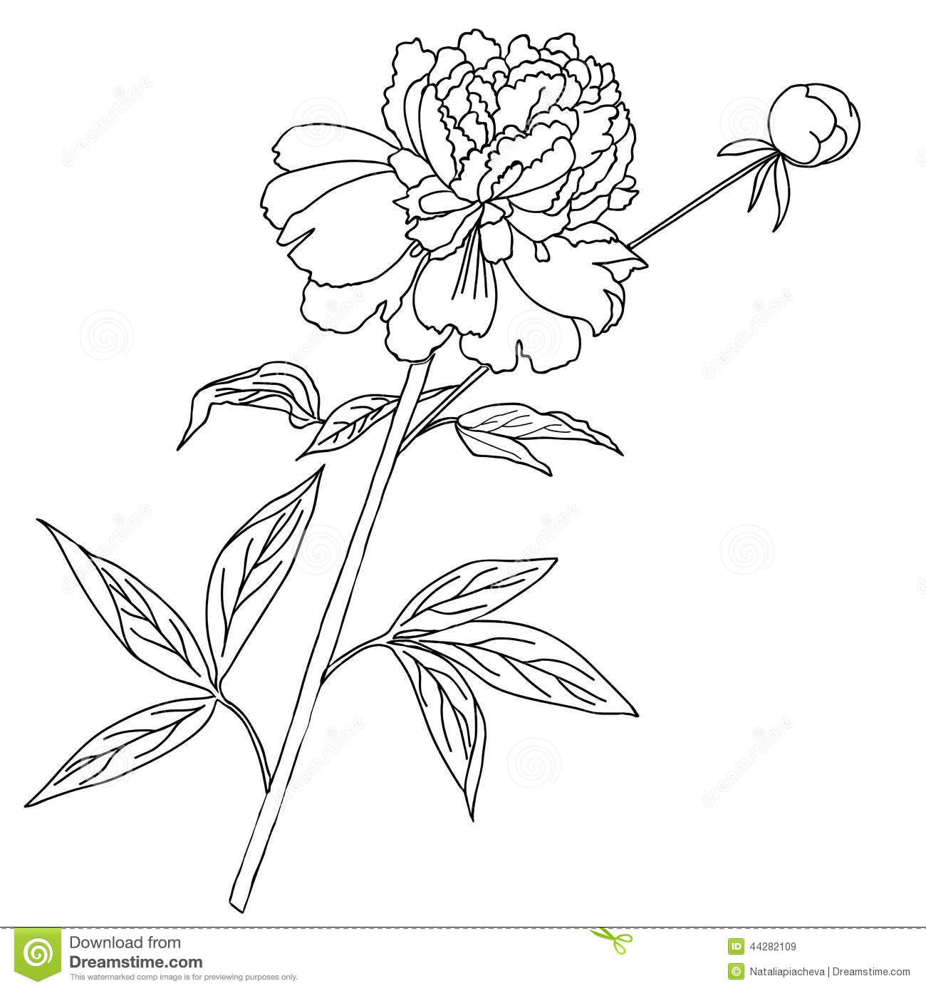 One Peony Etch Black And White Stock Vector