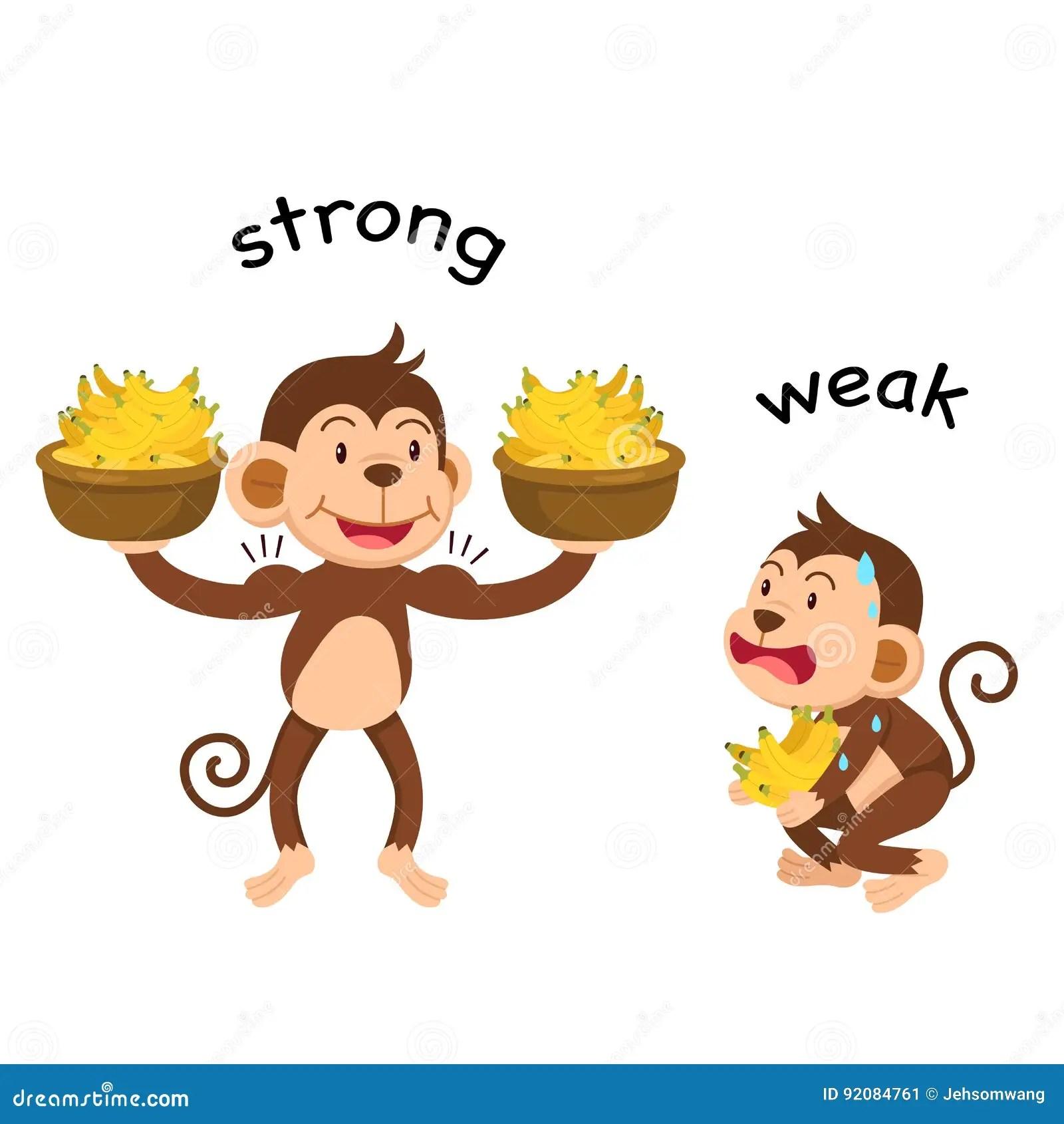 Opposite Words Strong And Weak Vector Stock Vector