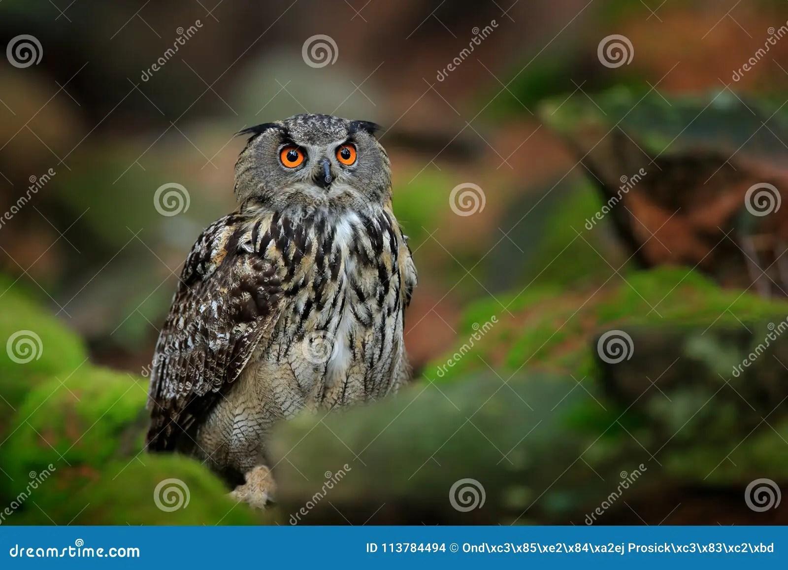 Owl In Forest Habitat Green Moss Stone Eurasian Eagle