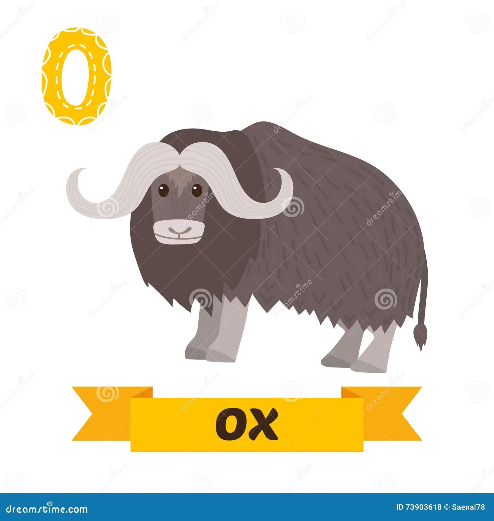 Ox O Letter Cute Children Animal Alphabet In Vector