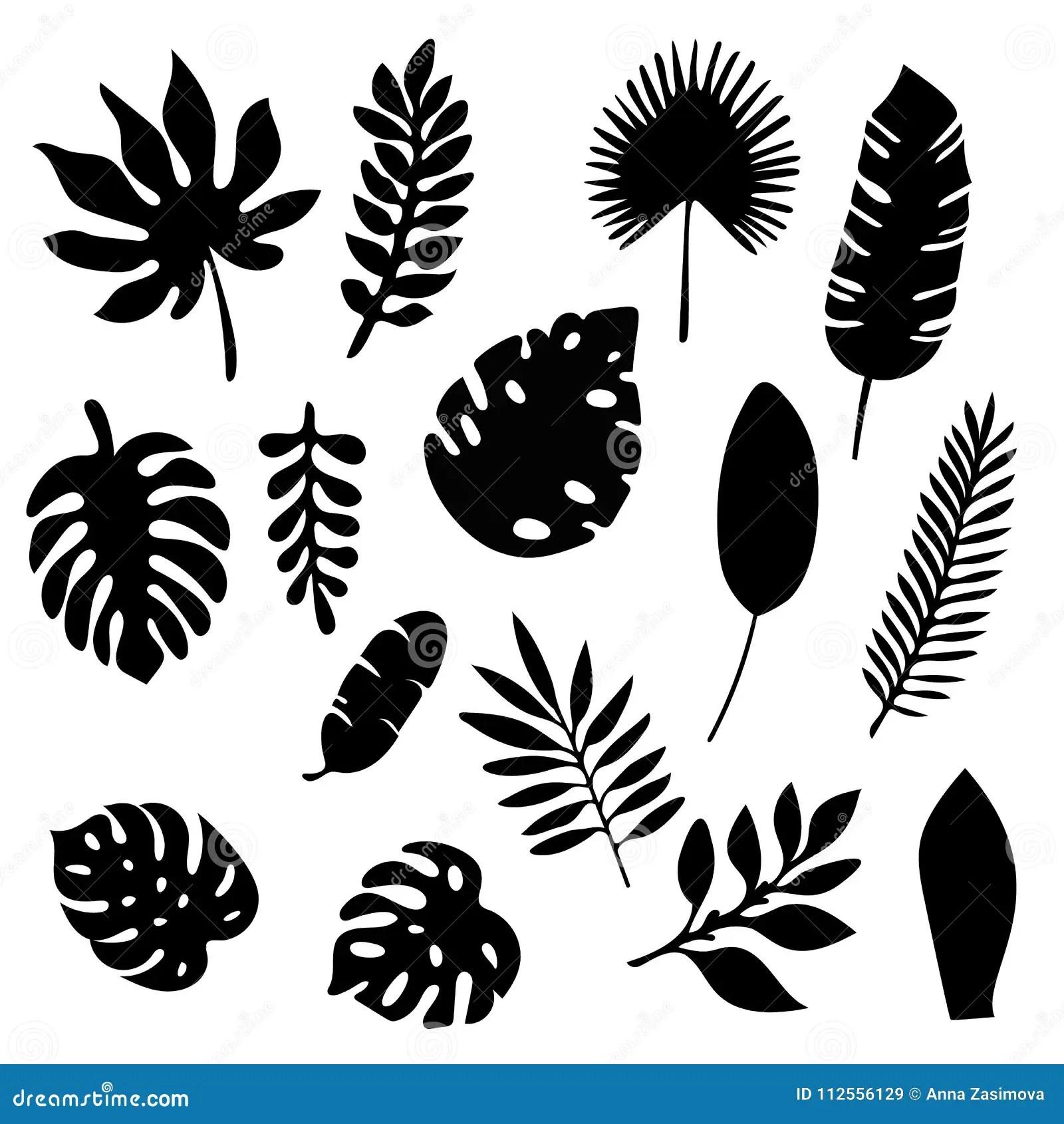 Palmbladkonturuppsattning Som Isoleras P Vit Bakgrund