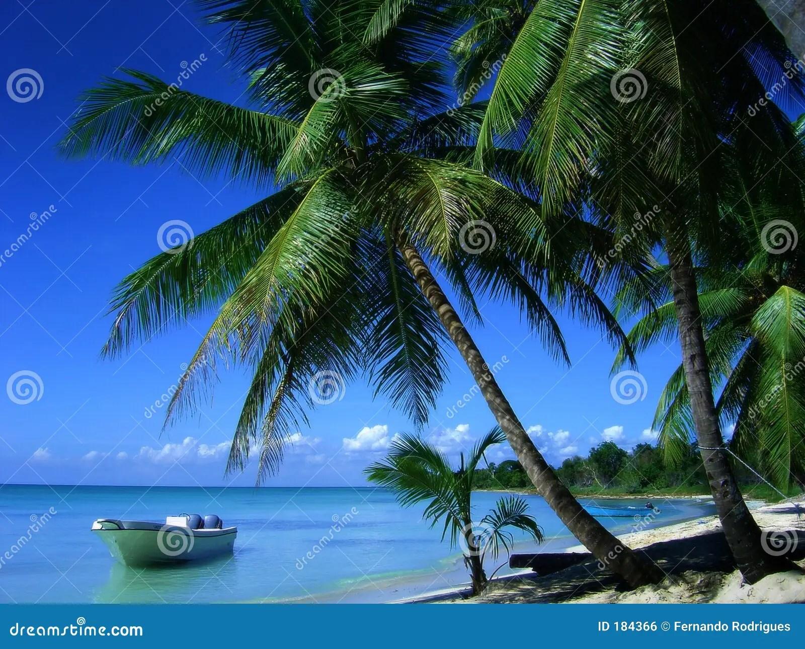 Paradiso Tropicale Fotografia Stock Immagine Di Litorale