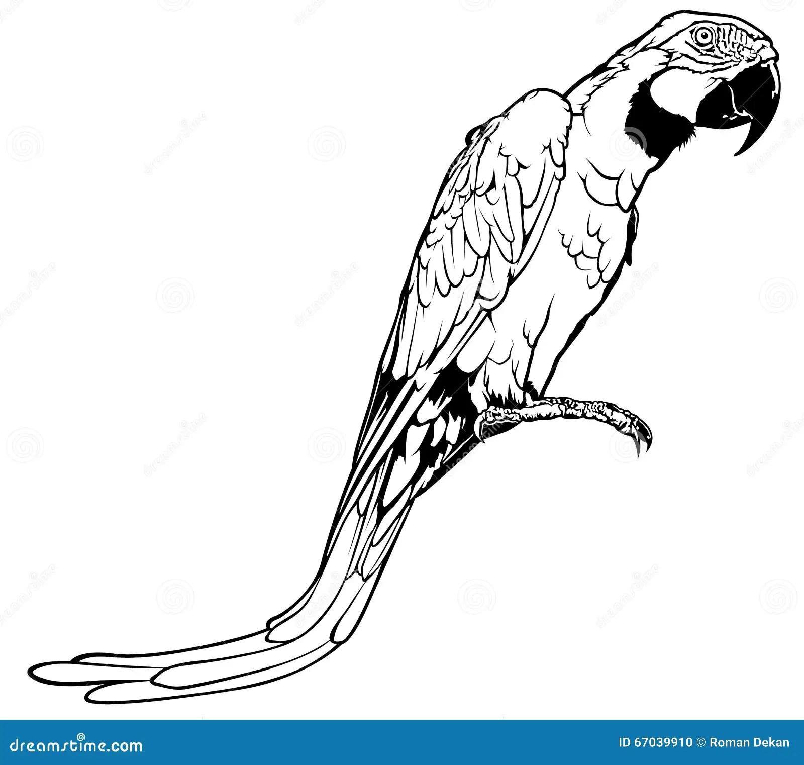 Parrot Stock Vector