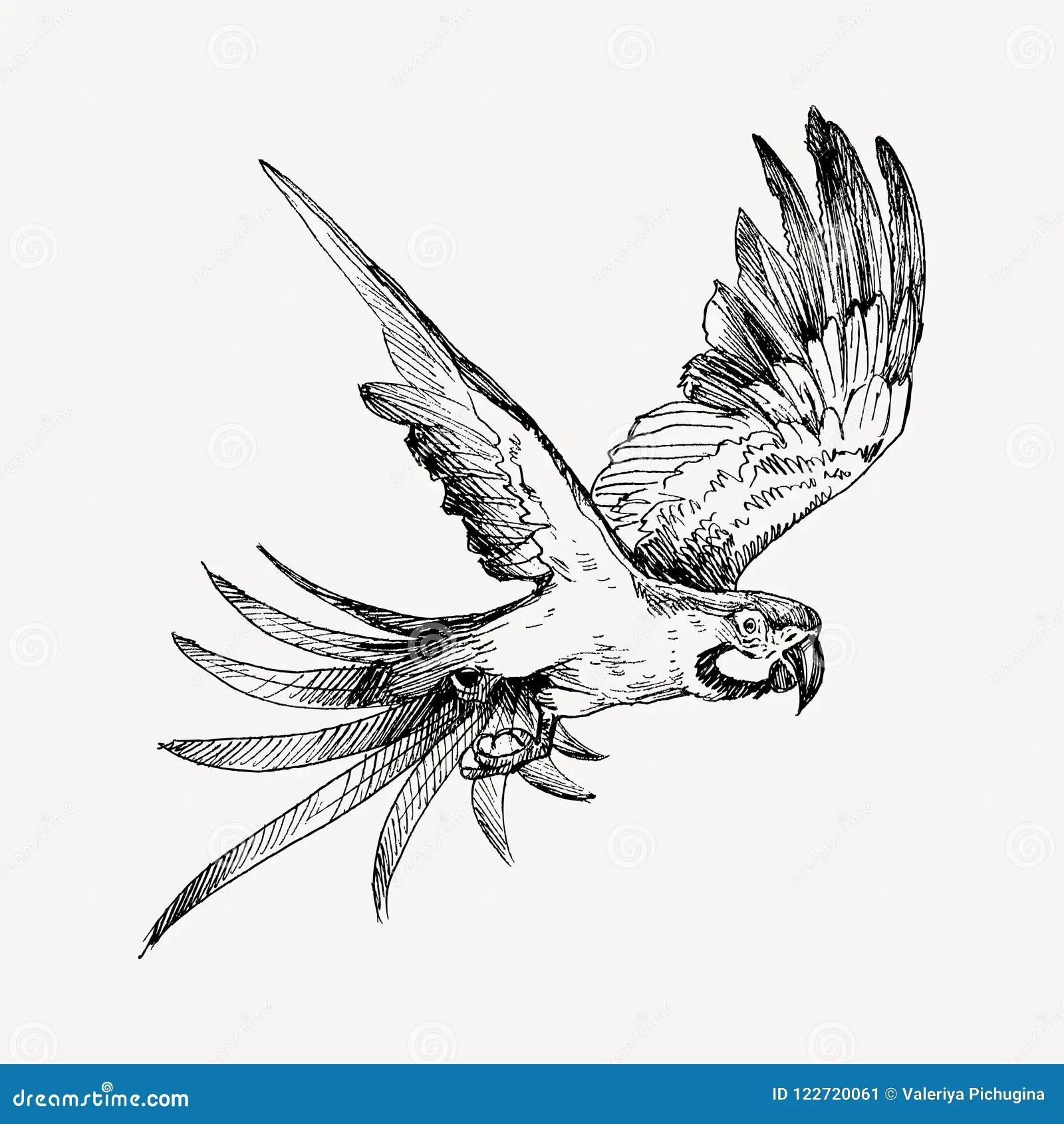 Clipart Parrot