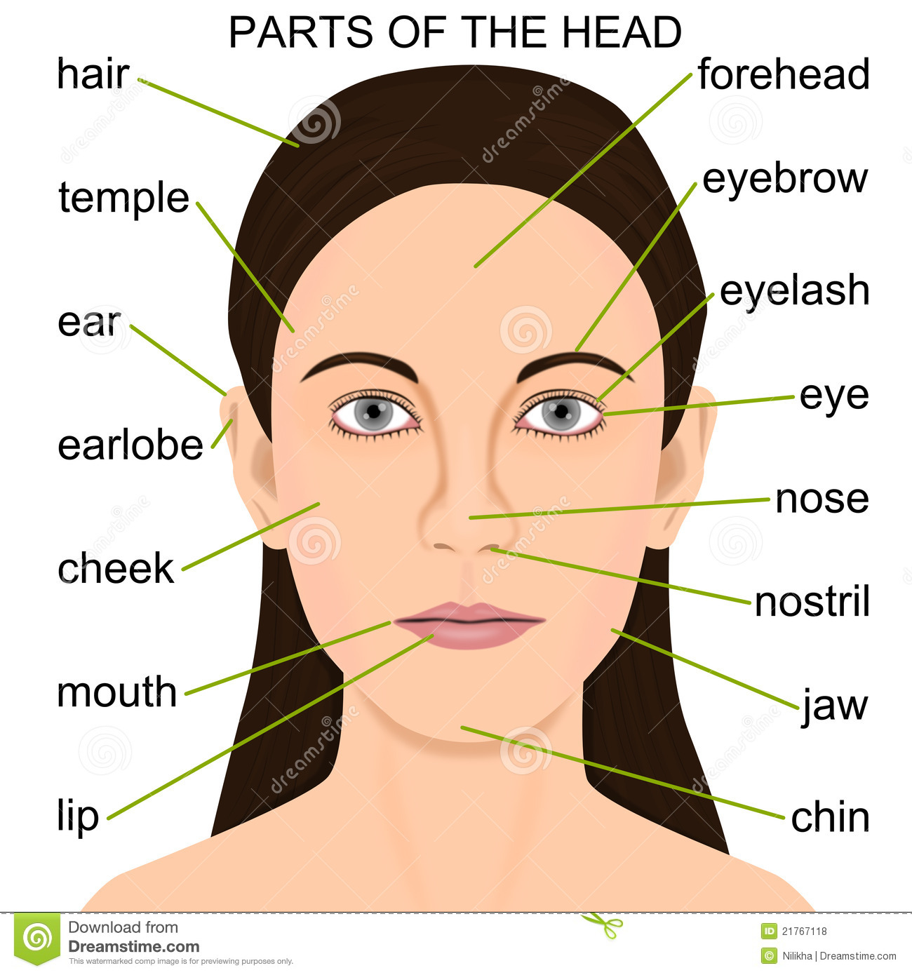 Parts Of The Head Stock Illustration Illustration Of