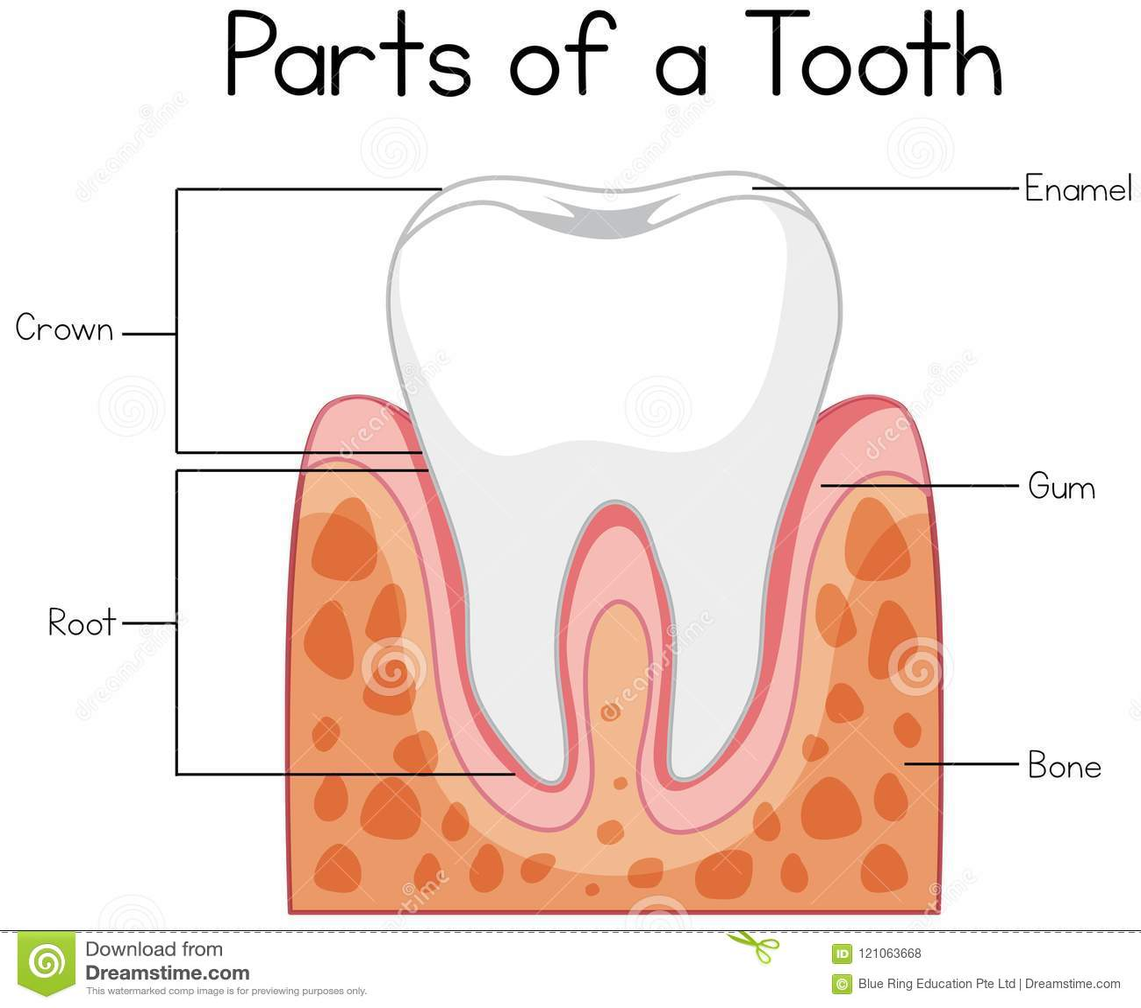 Parts Of The Throat Diagram