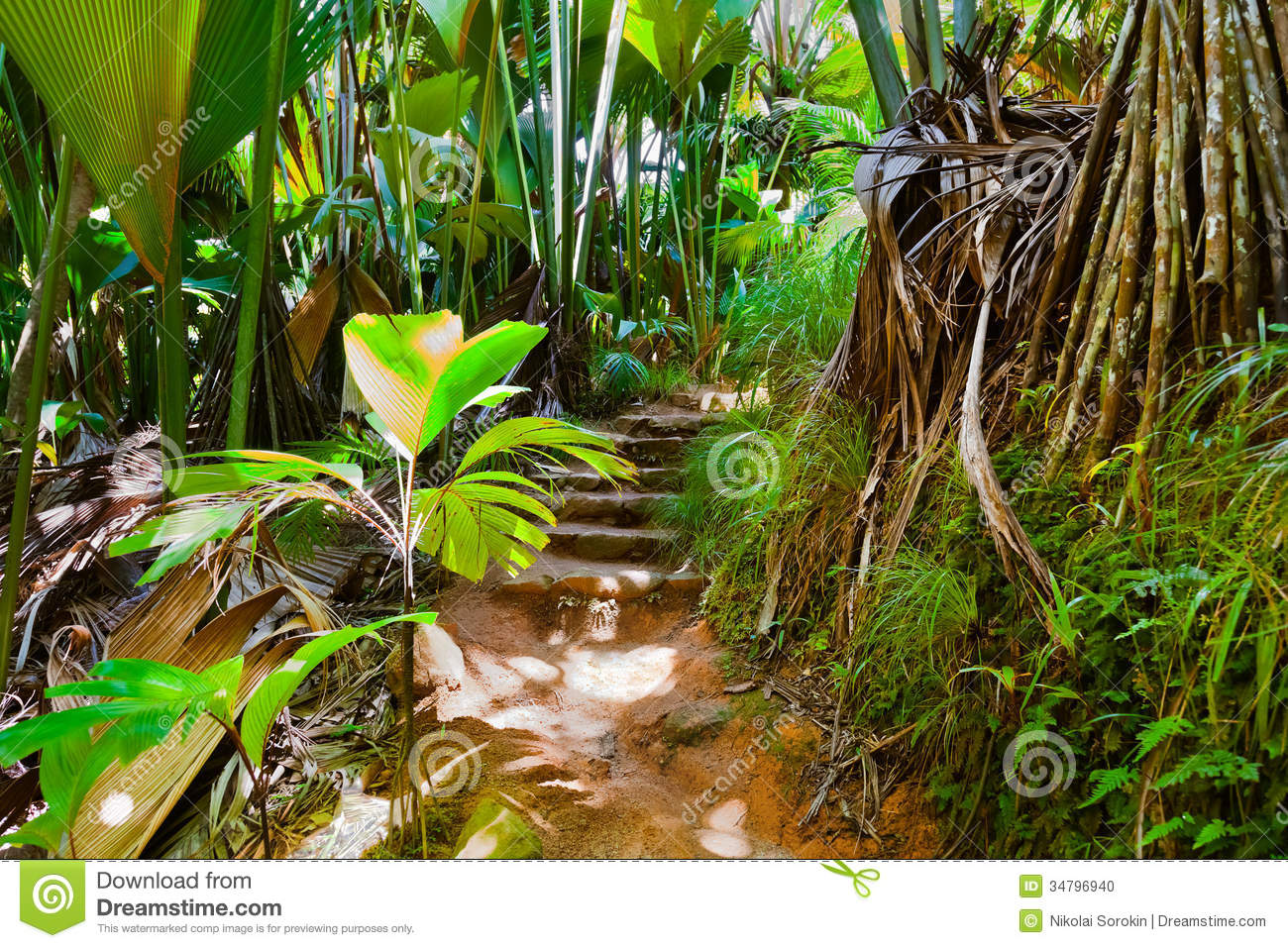 Pathway In Jungle Vallee De Mai Seychelles Stock Photo
