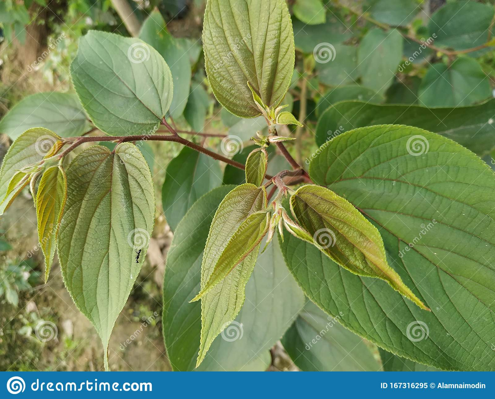 Plant Green Leaf Color Natural Beautiful Nature White