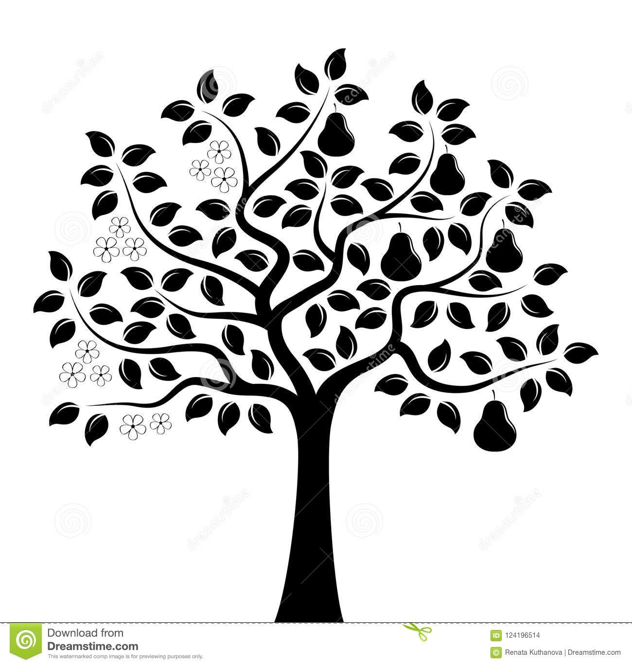Pear Tree In Two Seasons Stock Vector Illustration Of