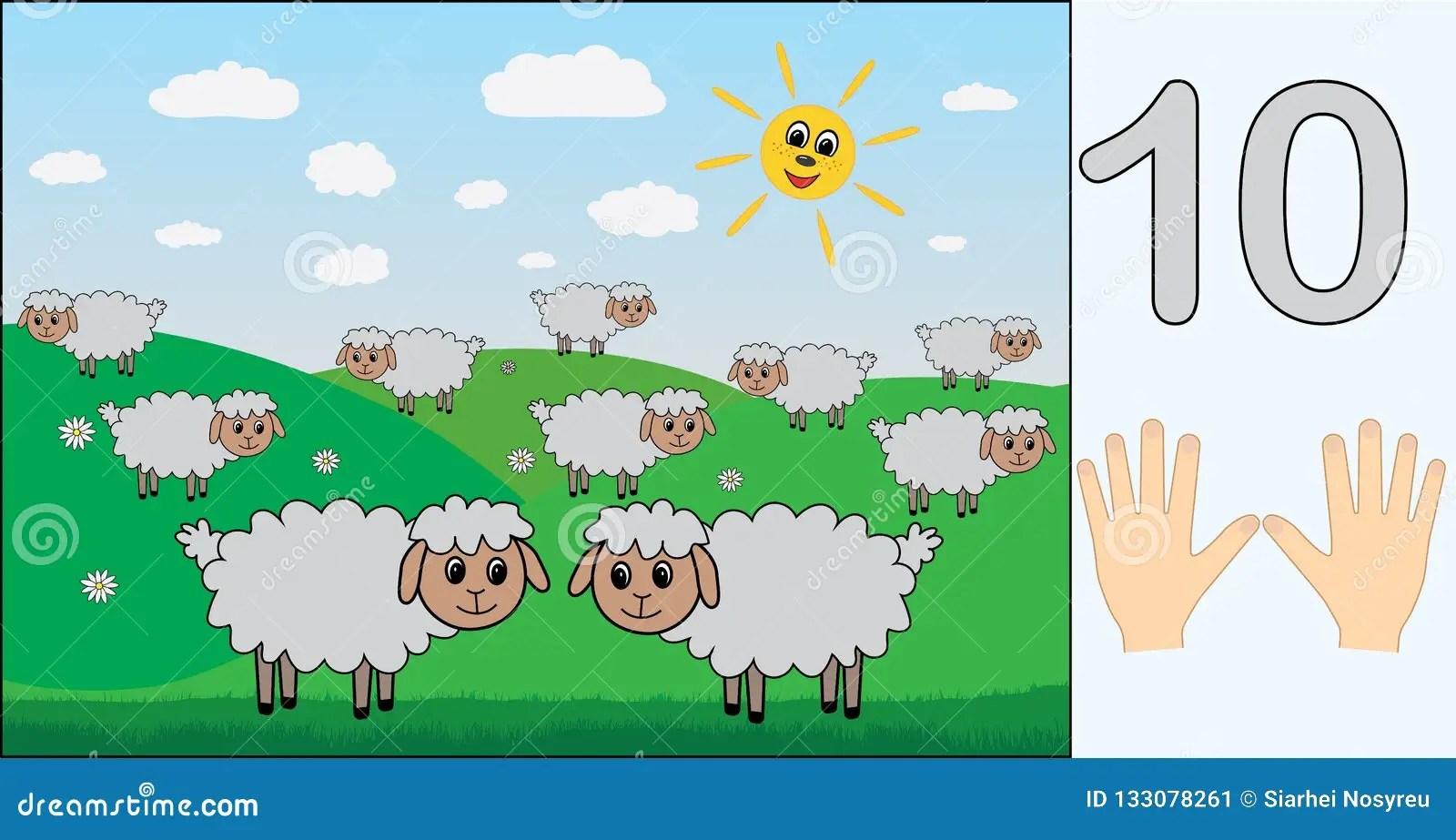 Pecore Numero 10ci Apprendimento Del Conteggio