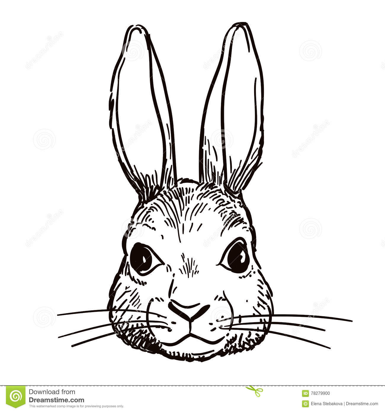 Pen And Ink Rabbit Head Sketch Stock Vector