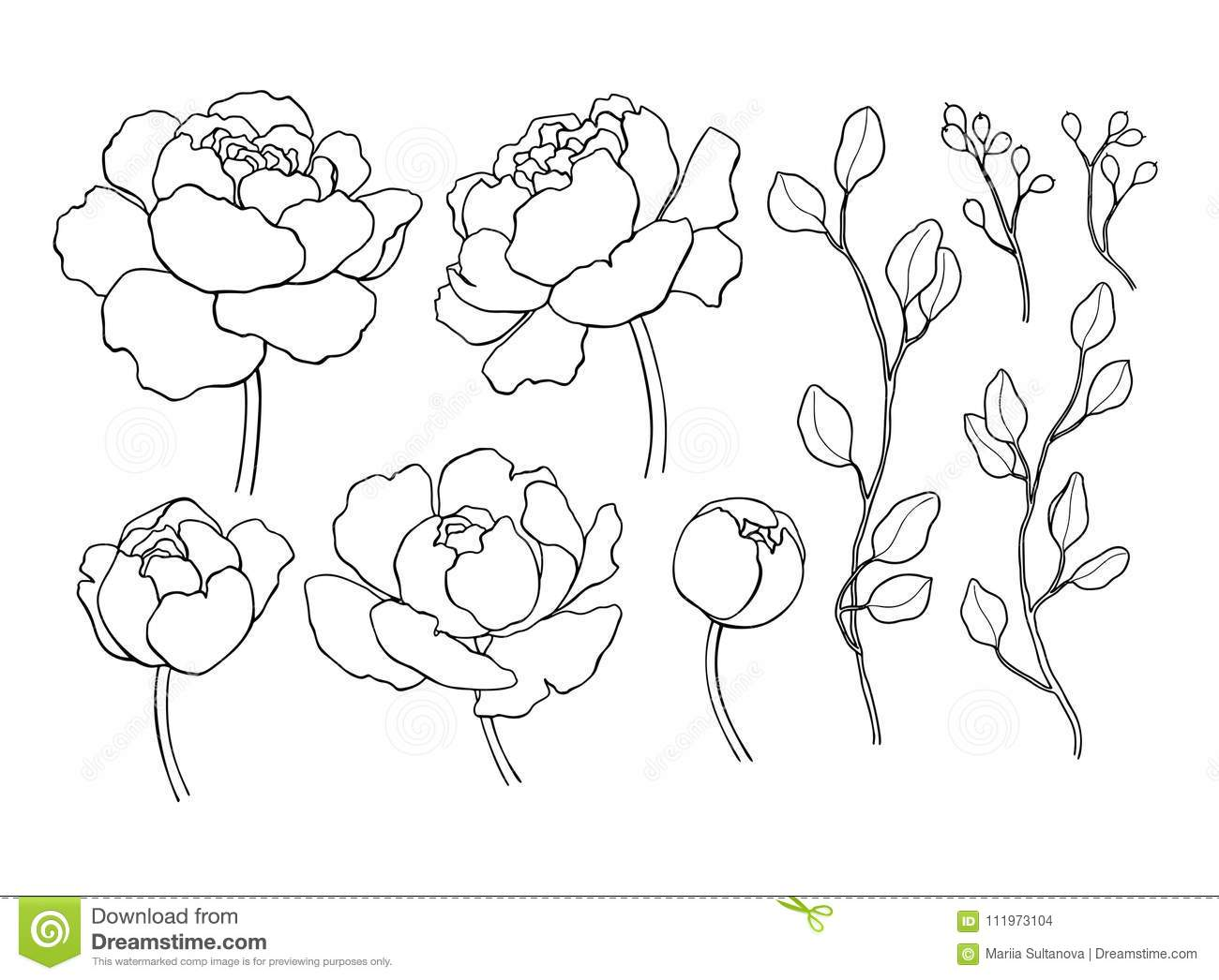 flower outline clipart