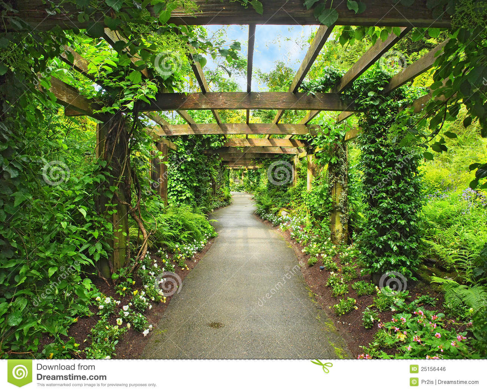 Pergola Passage Stock Photo Image Of Pergola Garden