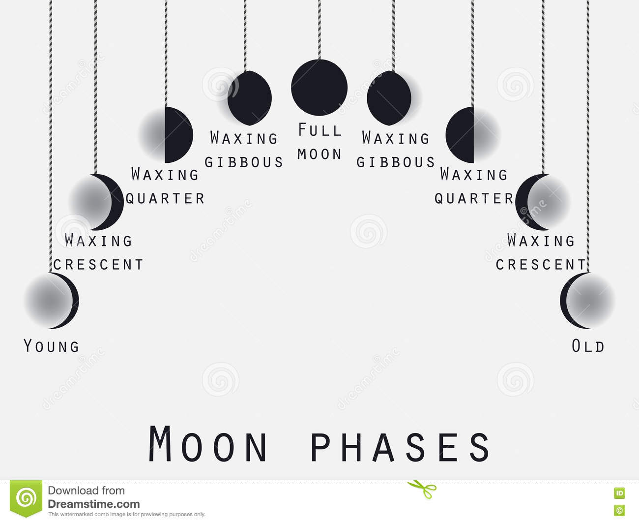 The Phases Of The Moon Lunar Phase Moon Stages Vector