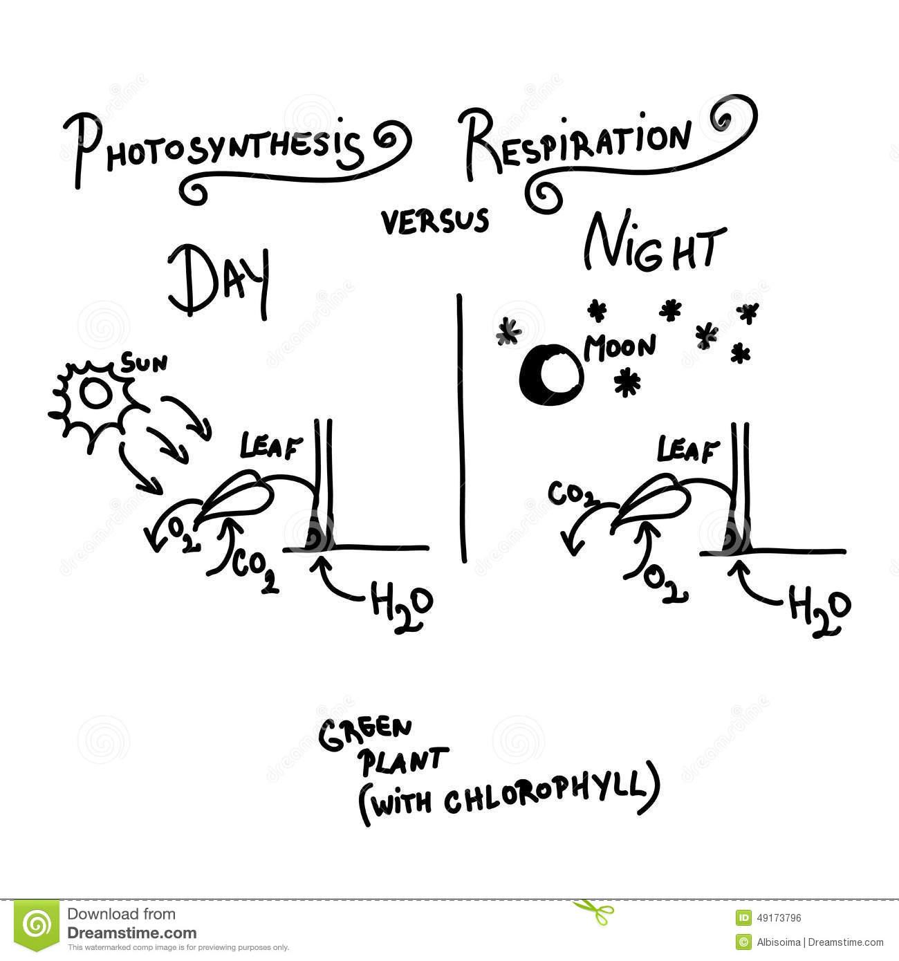 Photosynthesis And Respiration Stock Vector