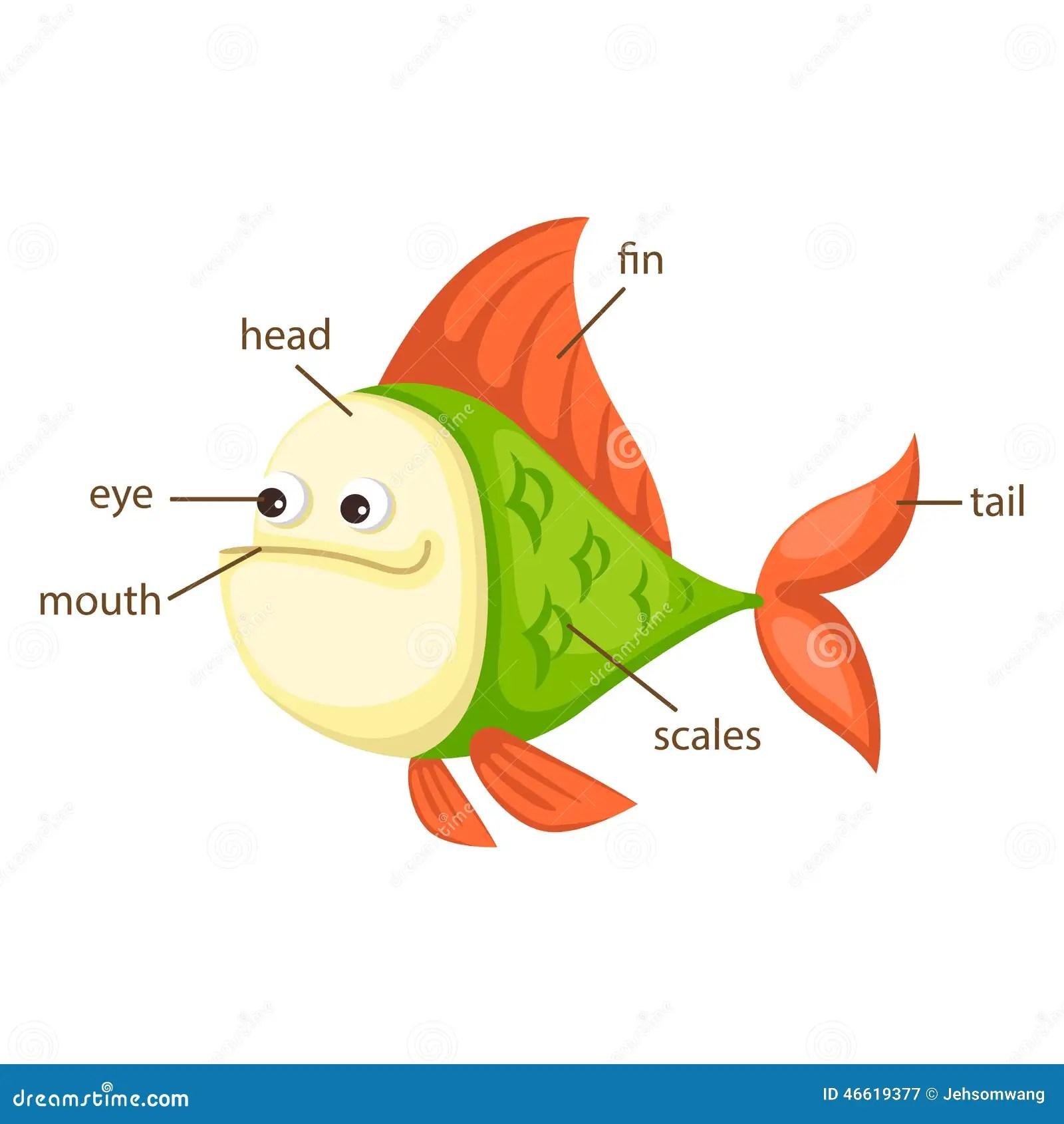 Pieza Del Vocabulario De Los Pescados Del Vector Del