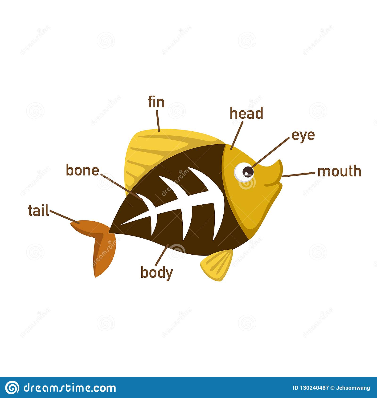 Pieza Del Vocabulario De Los Pescados De La Radiografia