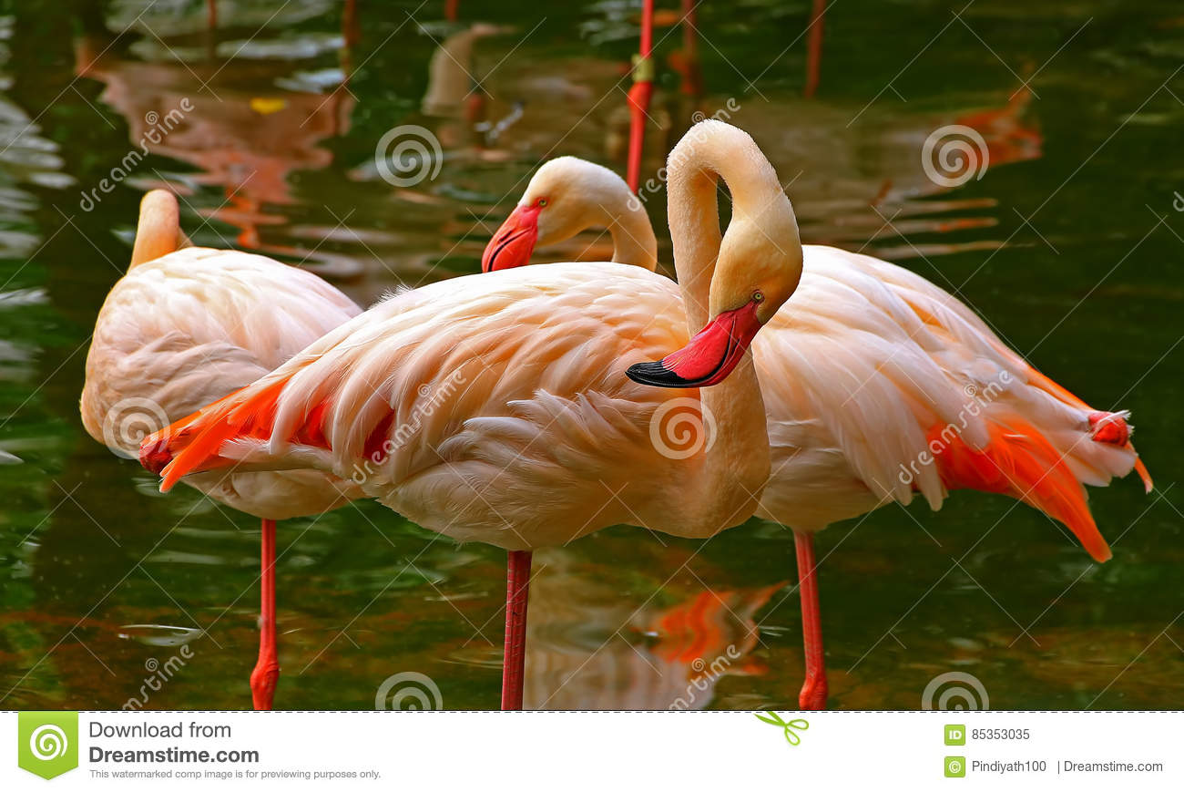 678 004 Birds Photos Free Royalty Free Stock Photos From Dreamstime