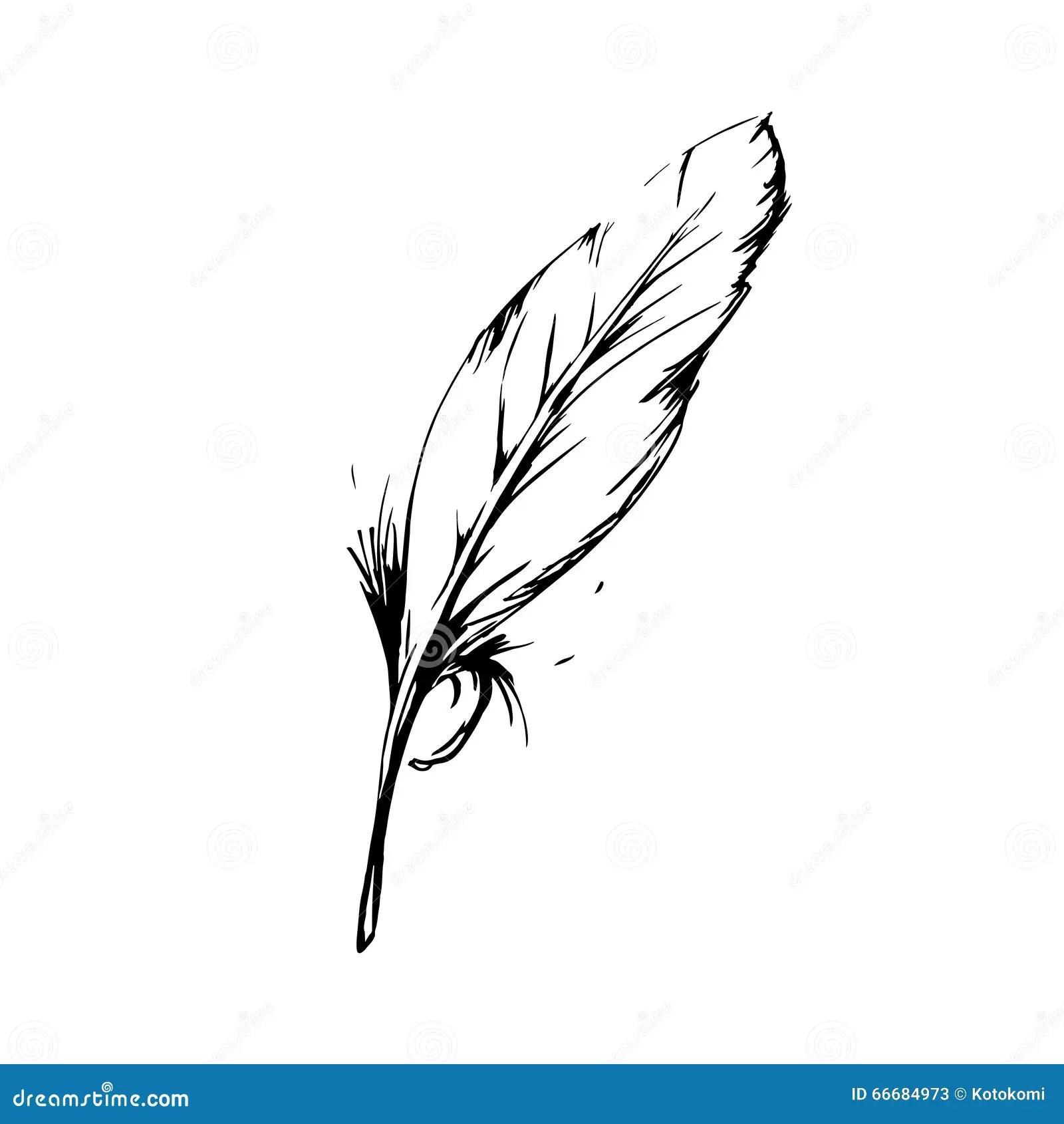 Piuma Di Uccello Disegnata A Mano Simbolo Di Conoscenza