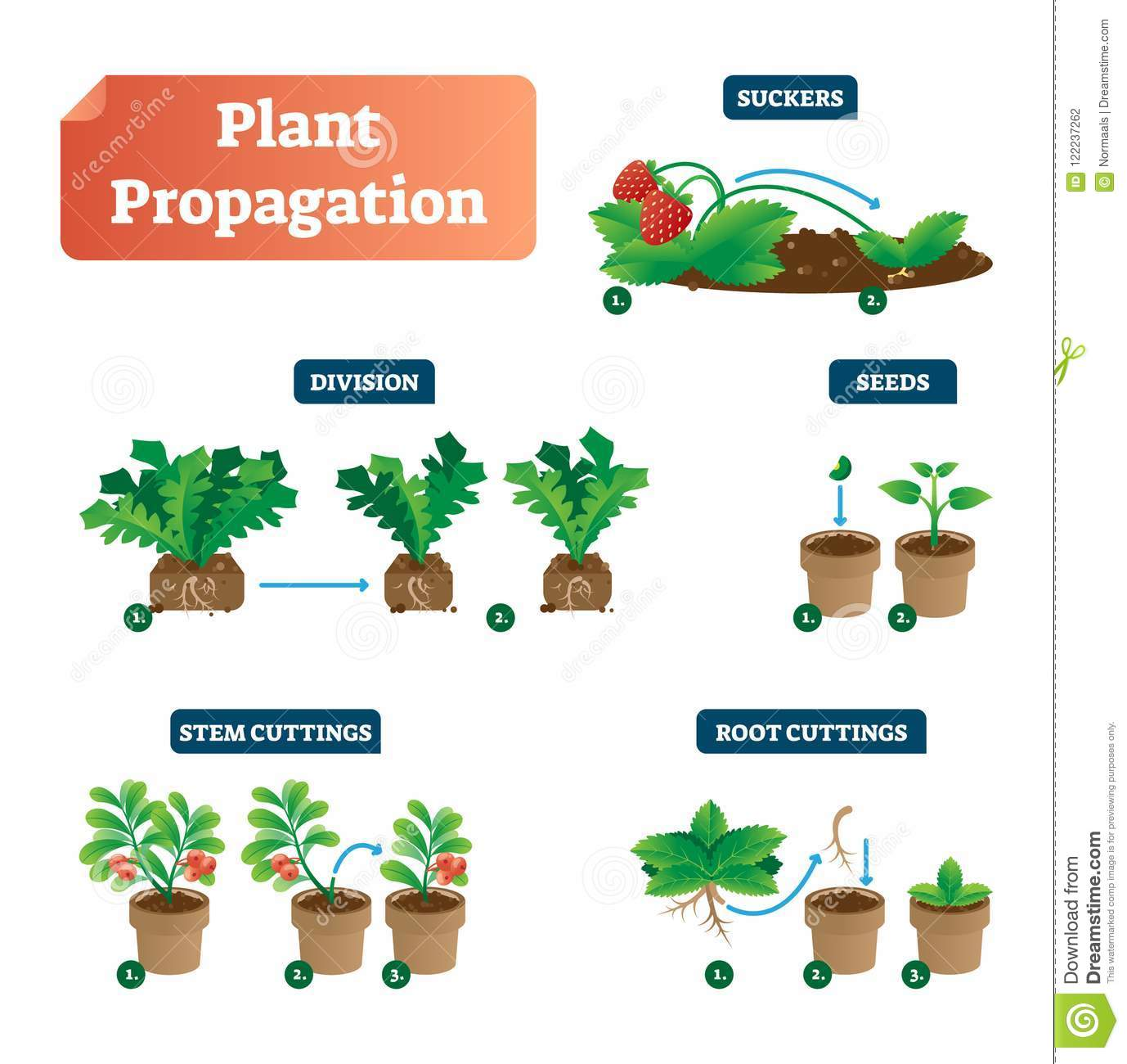 Plant Propagation Vector Illustration Diagram Scheme With