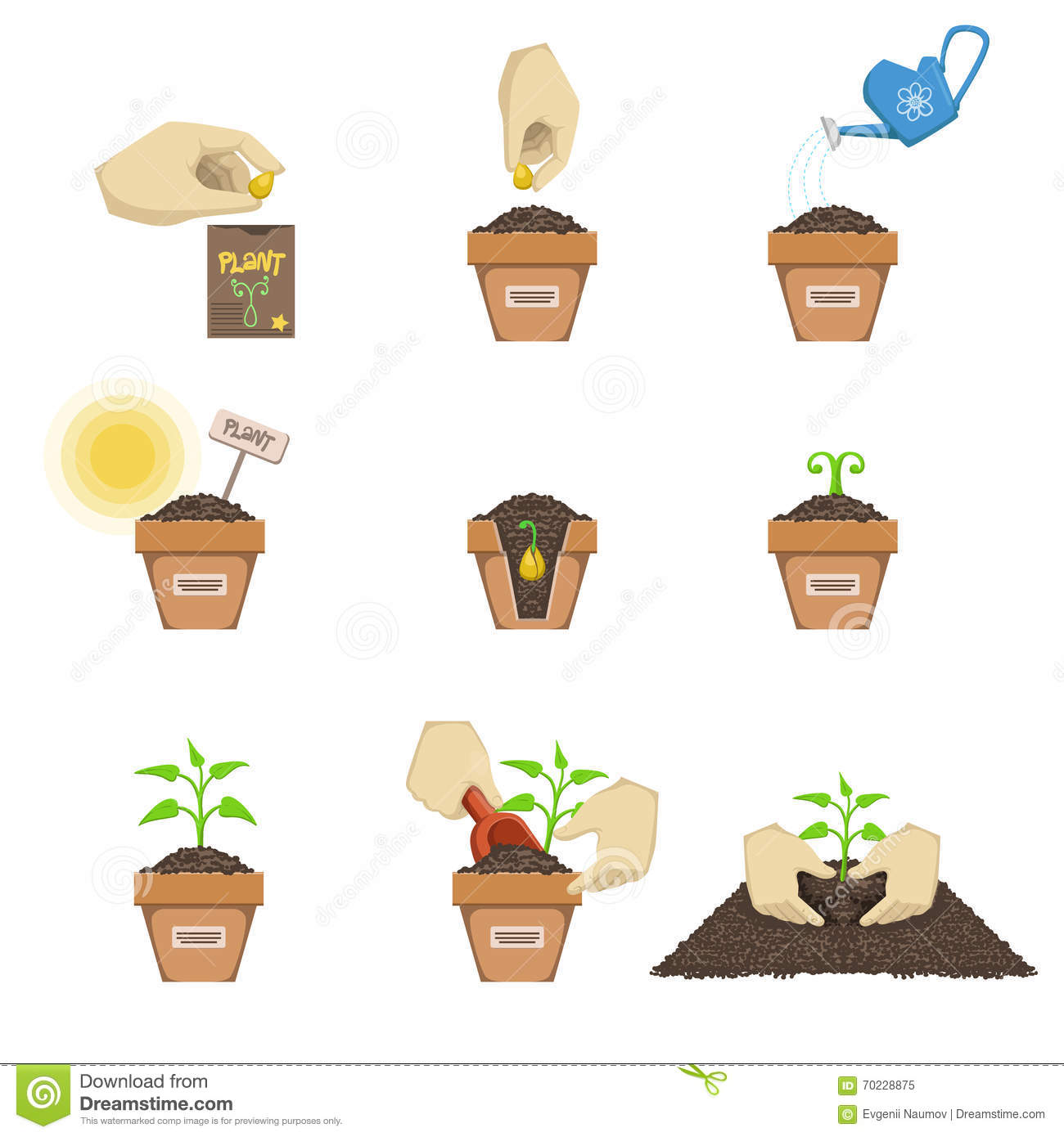 Planting The Seed Sequence Stock Vector