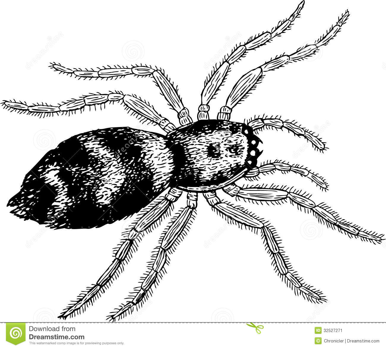 Poisonous Spider Stock Image