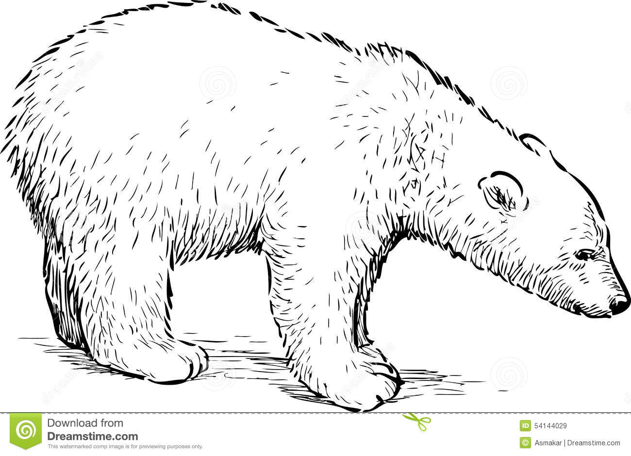 Polar Bear Cub Stock Vector