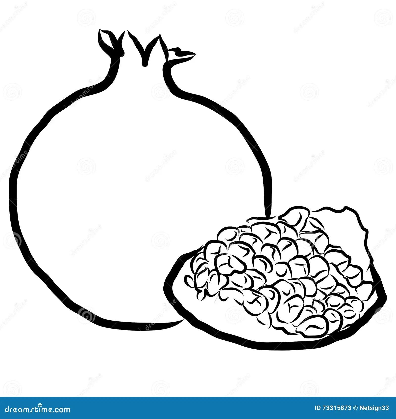 Pomegranate Sketched Outline Vector Illustration Stock