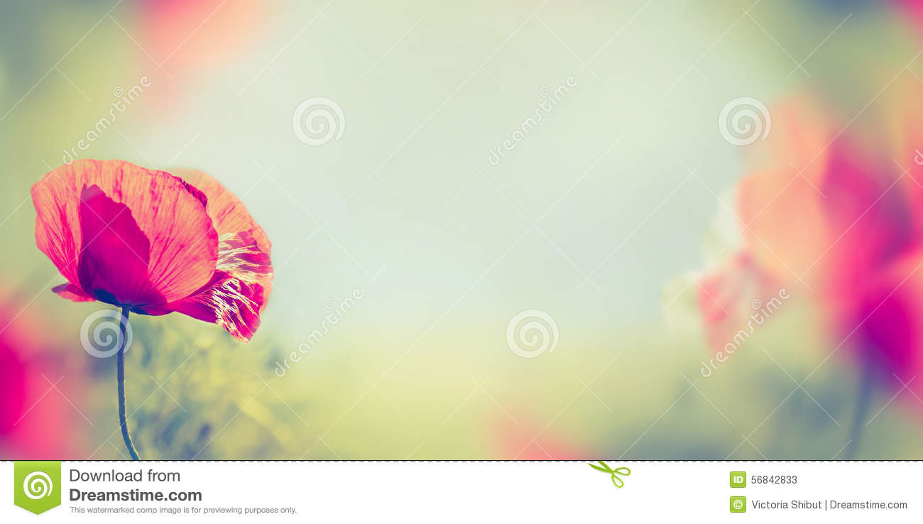 26 110 598 Nature Photos Free Royalty Free Stock Photos From Dreamstime