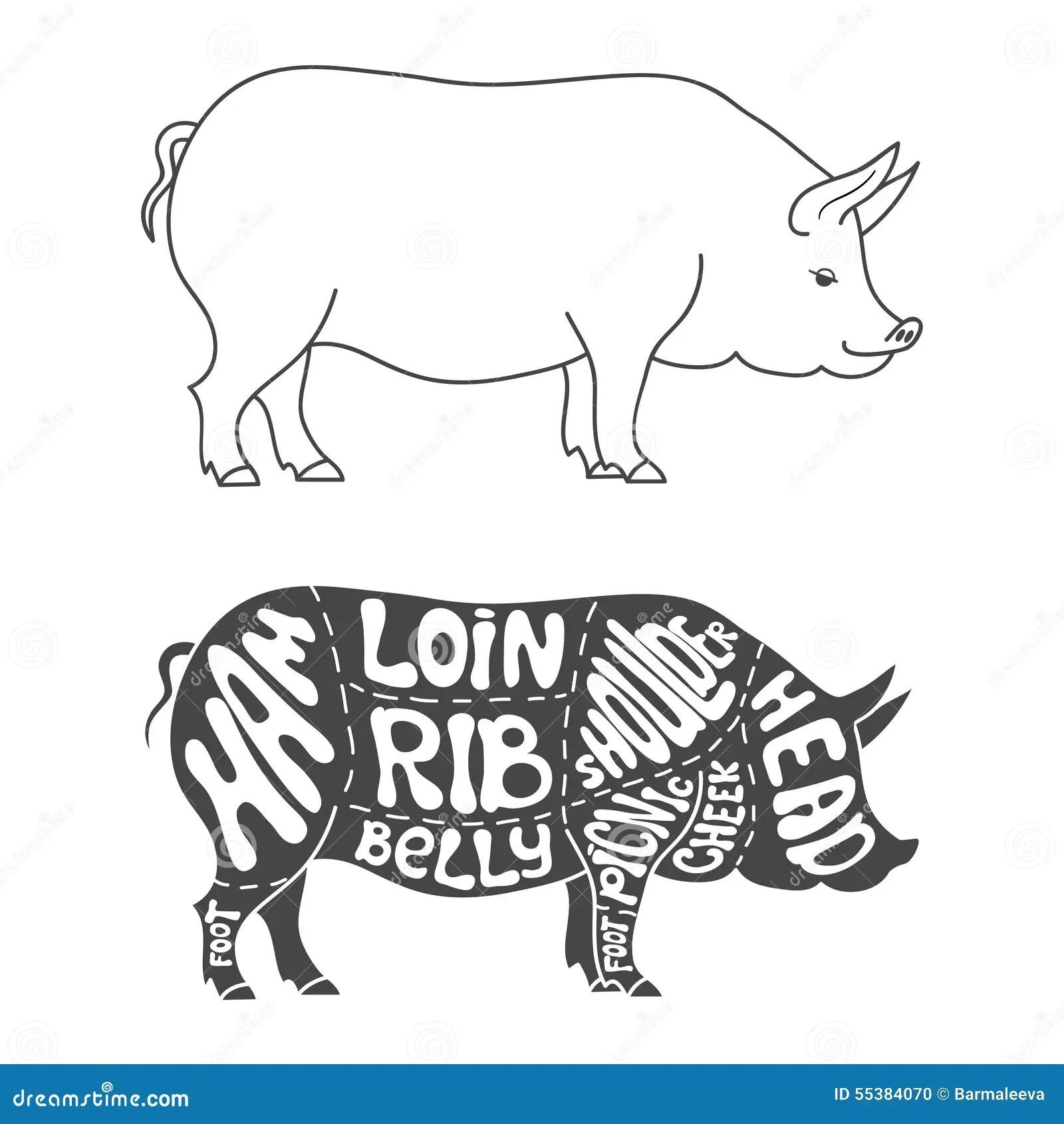 Pork Cuts Diagram Stock Vector Image Of Meat Shop
