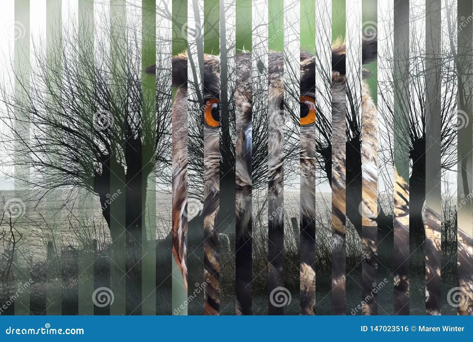 Portrait Of An Eurasian Eagle Owl Bubo Bubo And Its