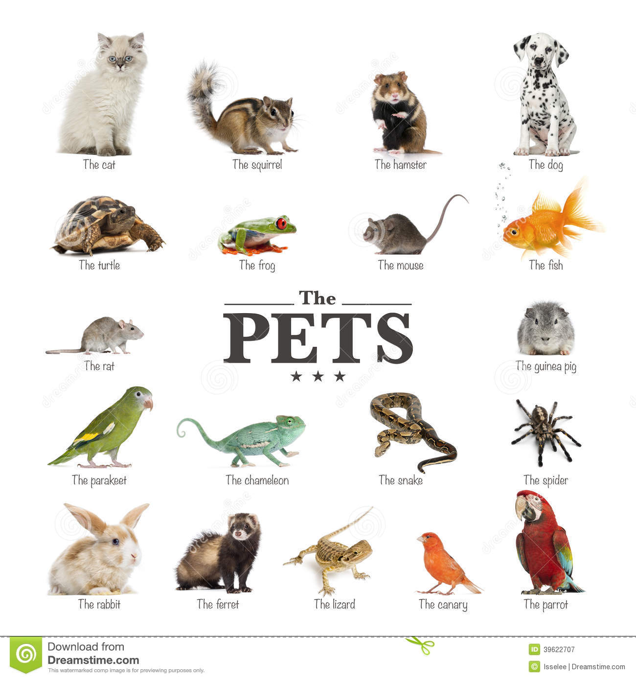 Poster Of Pets In English Stock Photo