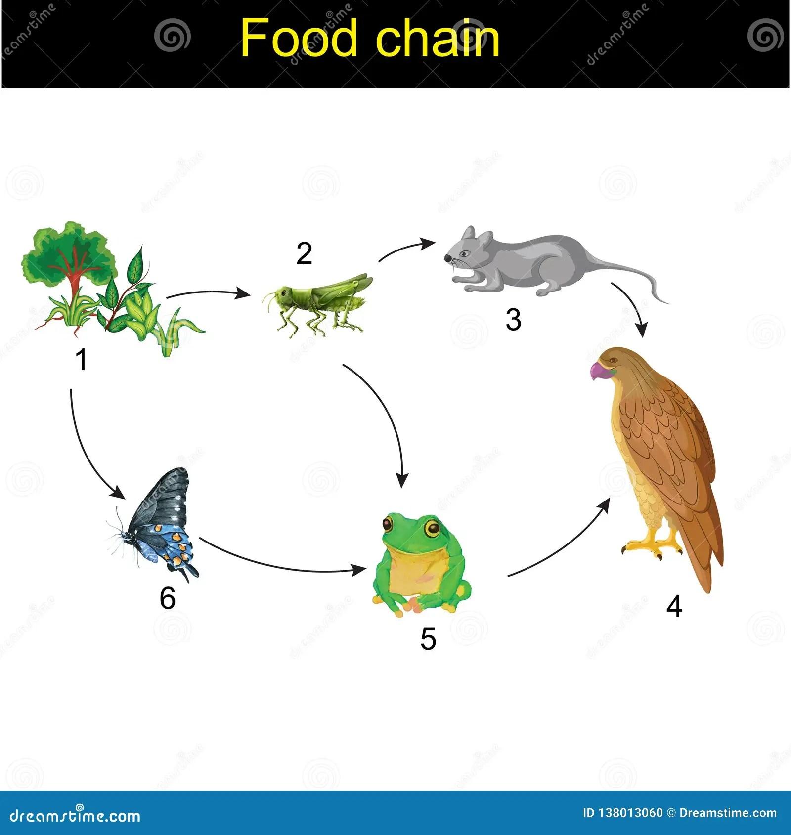 Food Chain Vector Illustration